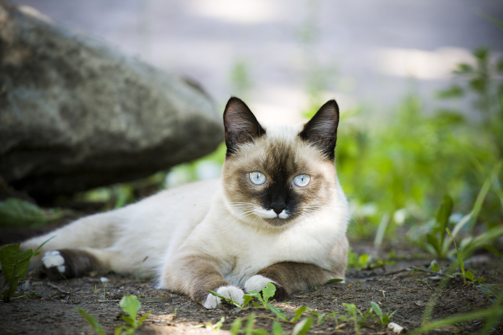 Tuna Allergy in Cats