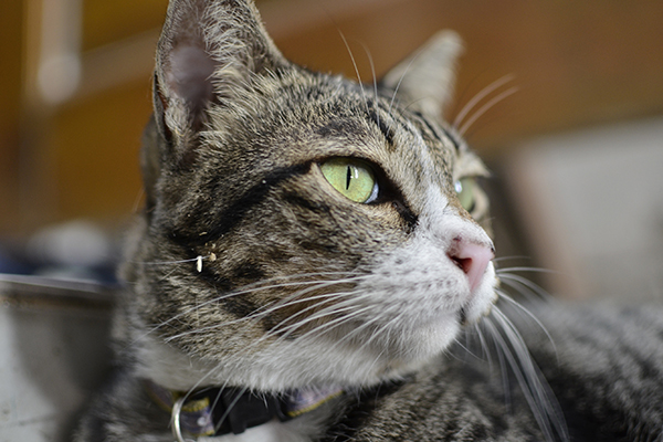 Unintentional Eye Movement in Cats