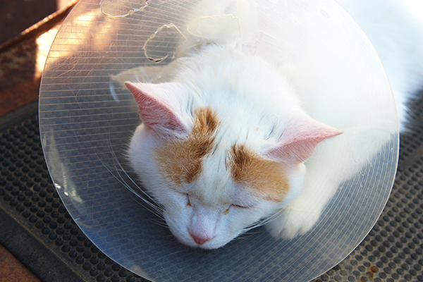 Upper and Lower Jaw Fractures in Cats
