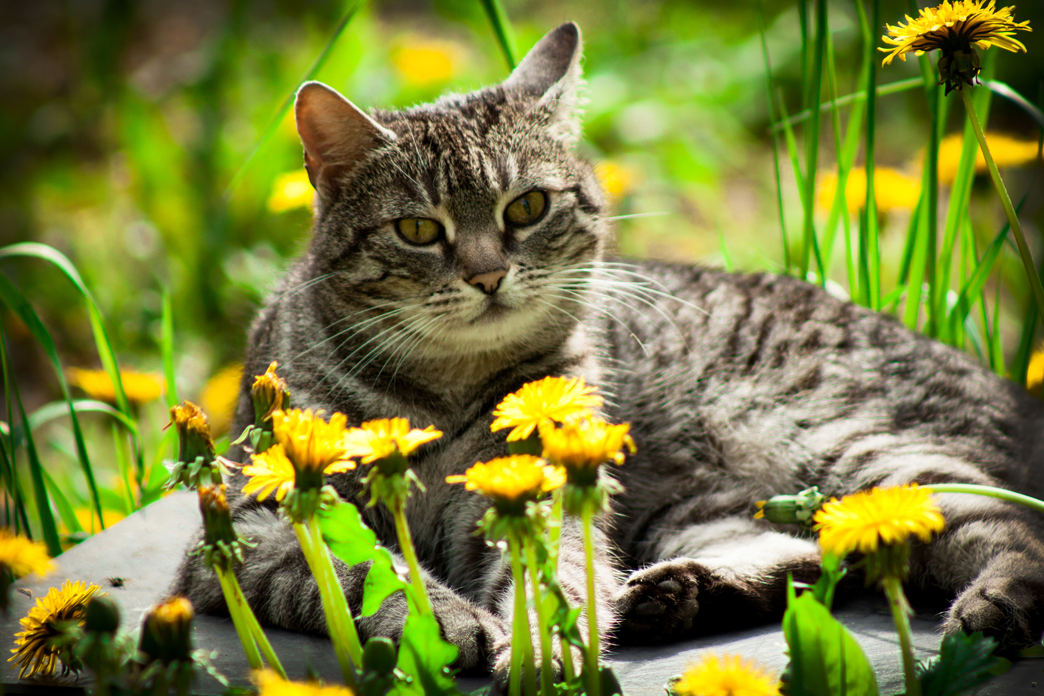 Vectra Allergy in Cats