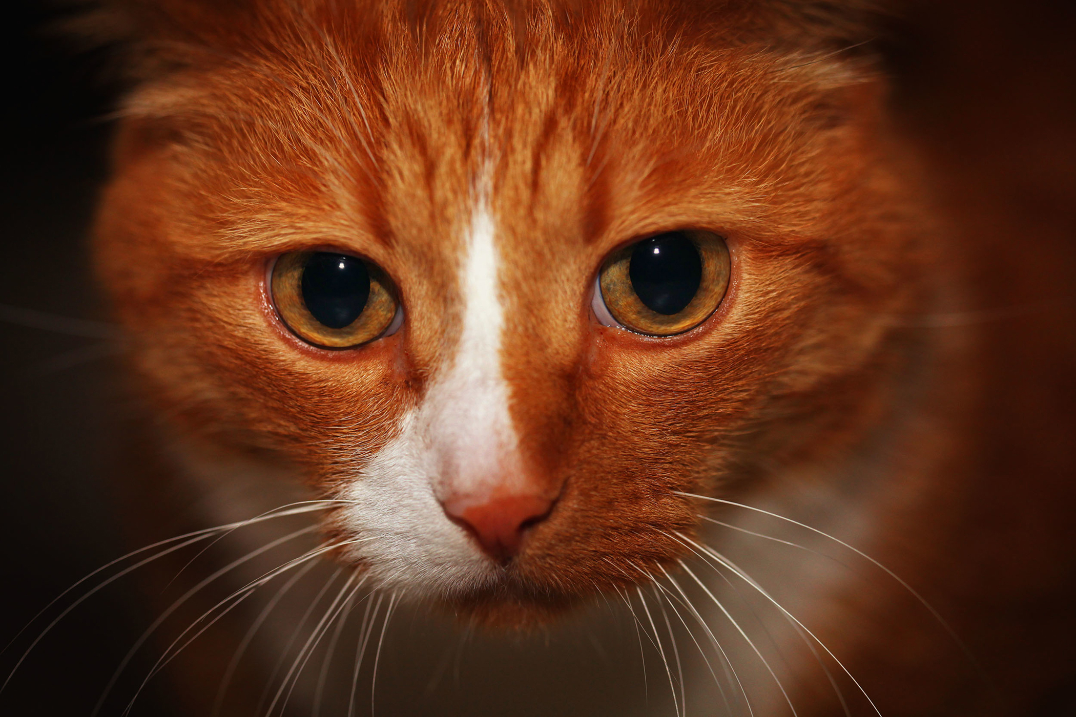 Venison Allergy in Cats