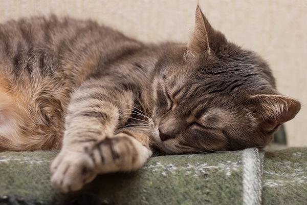Ventricular Standstill in Cats