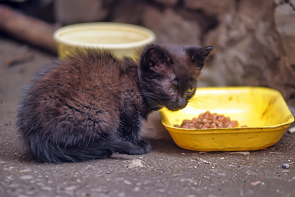 Vomiting With Bile in Cats