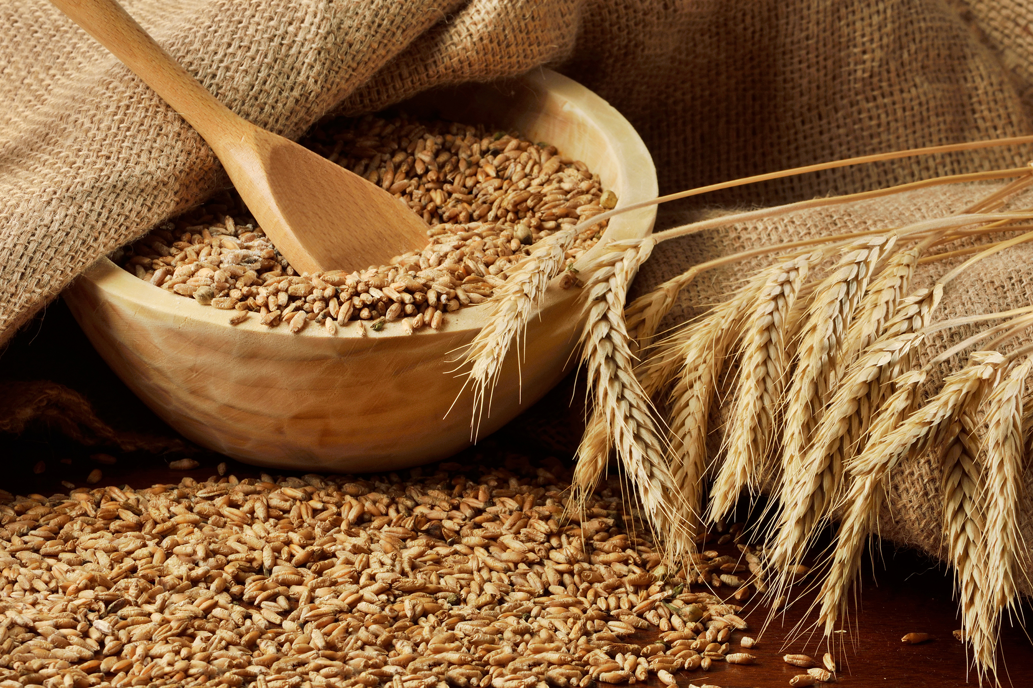 Wheat Allergy in Cats