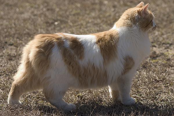 Yellow Skin in Cats