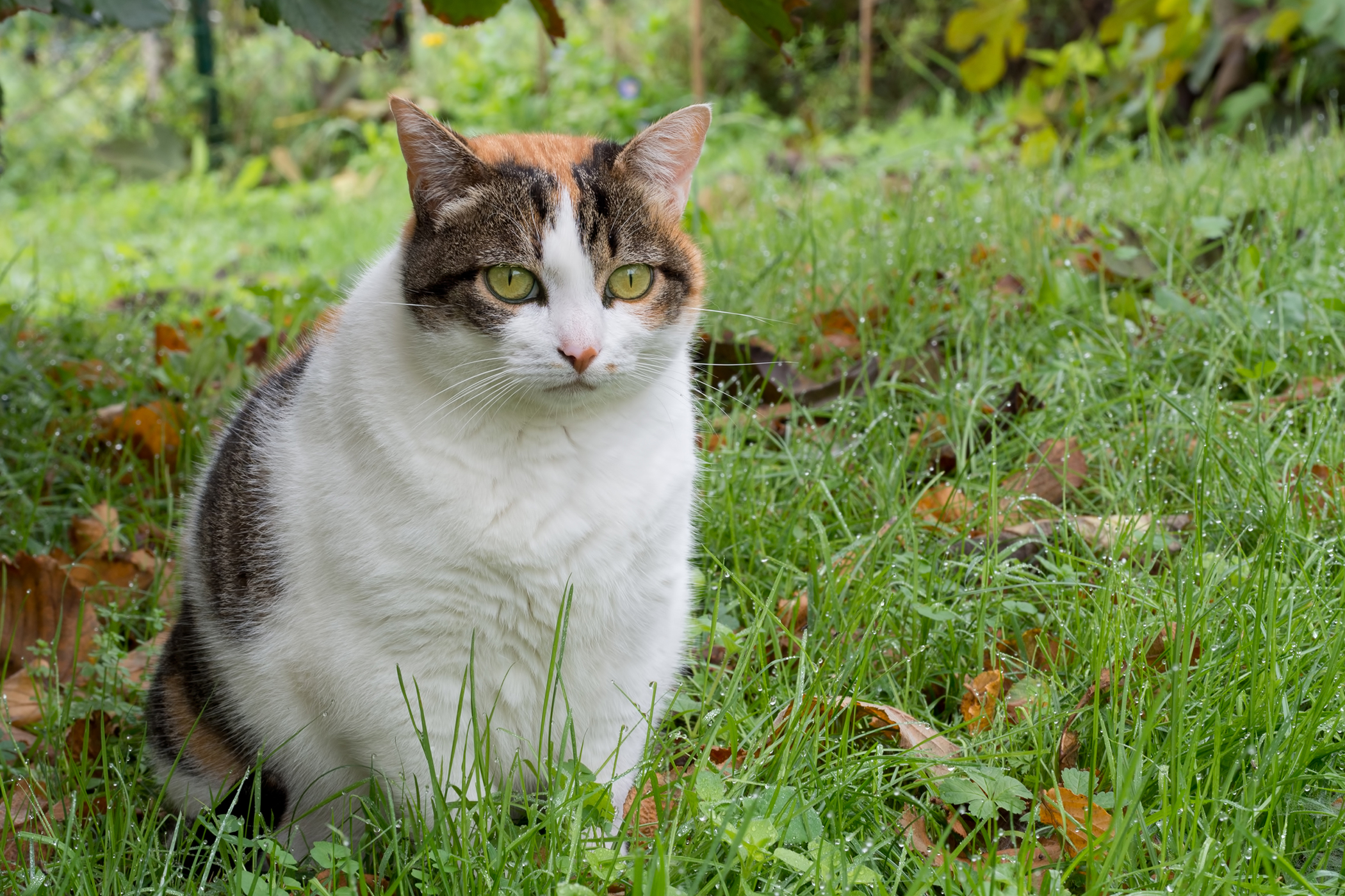 Yogurt Allergy in Cats
