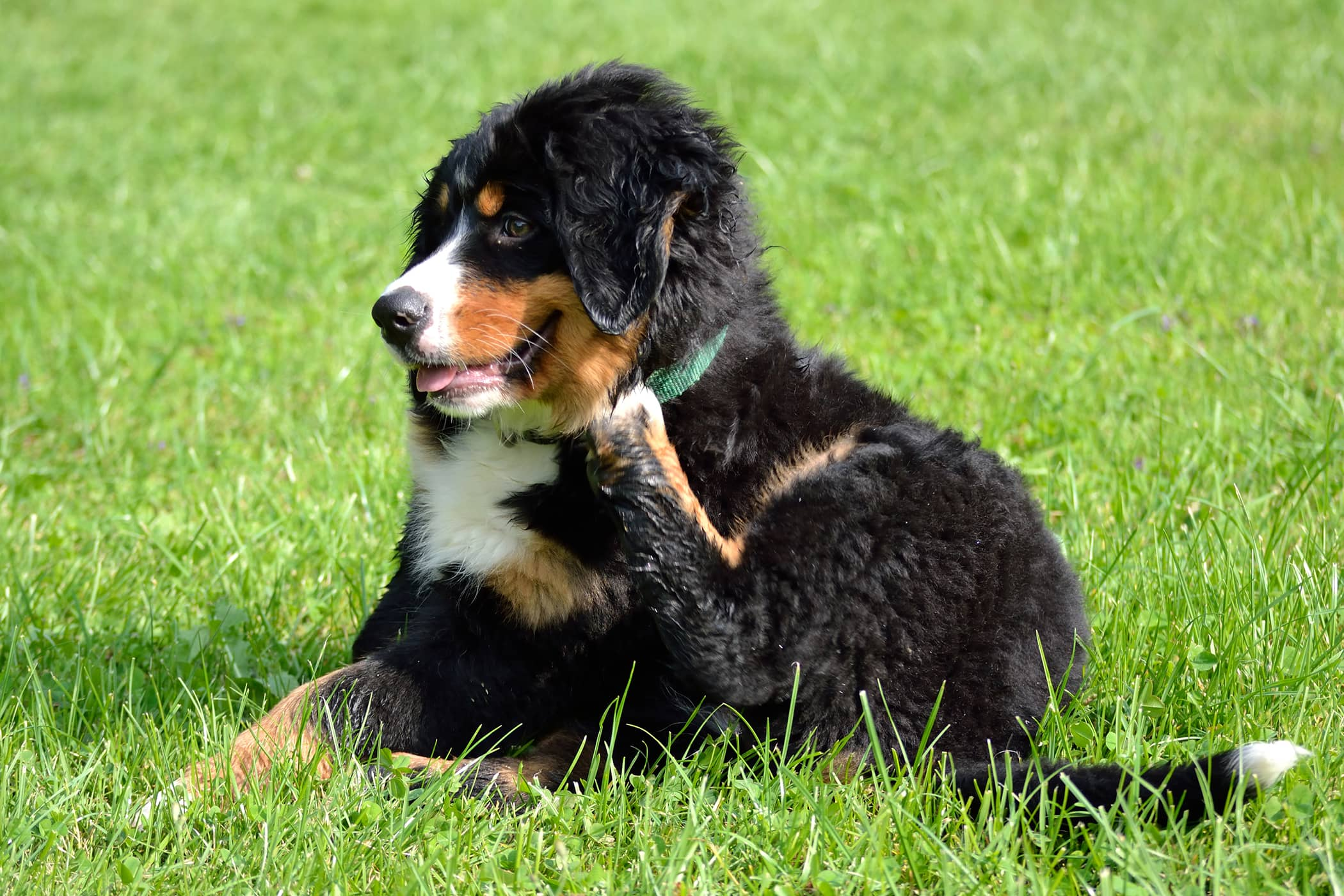 Allergy Treatment in Dogs