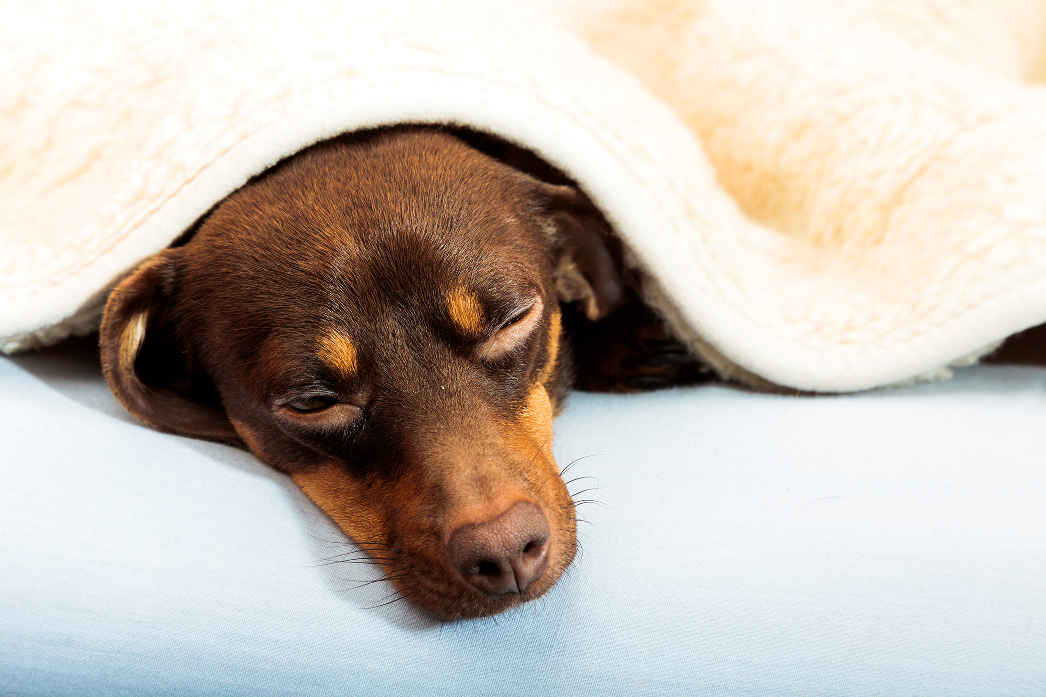 Foods For Anemia In Dogs