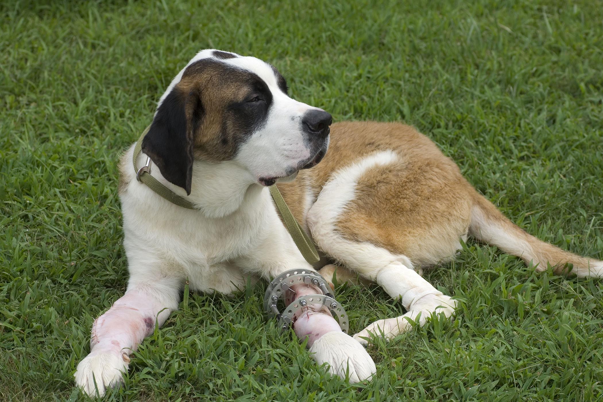 Arthroscopic Surgery in Dogs
