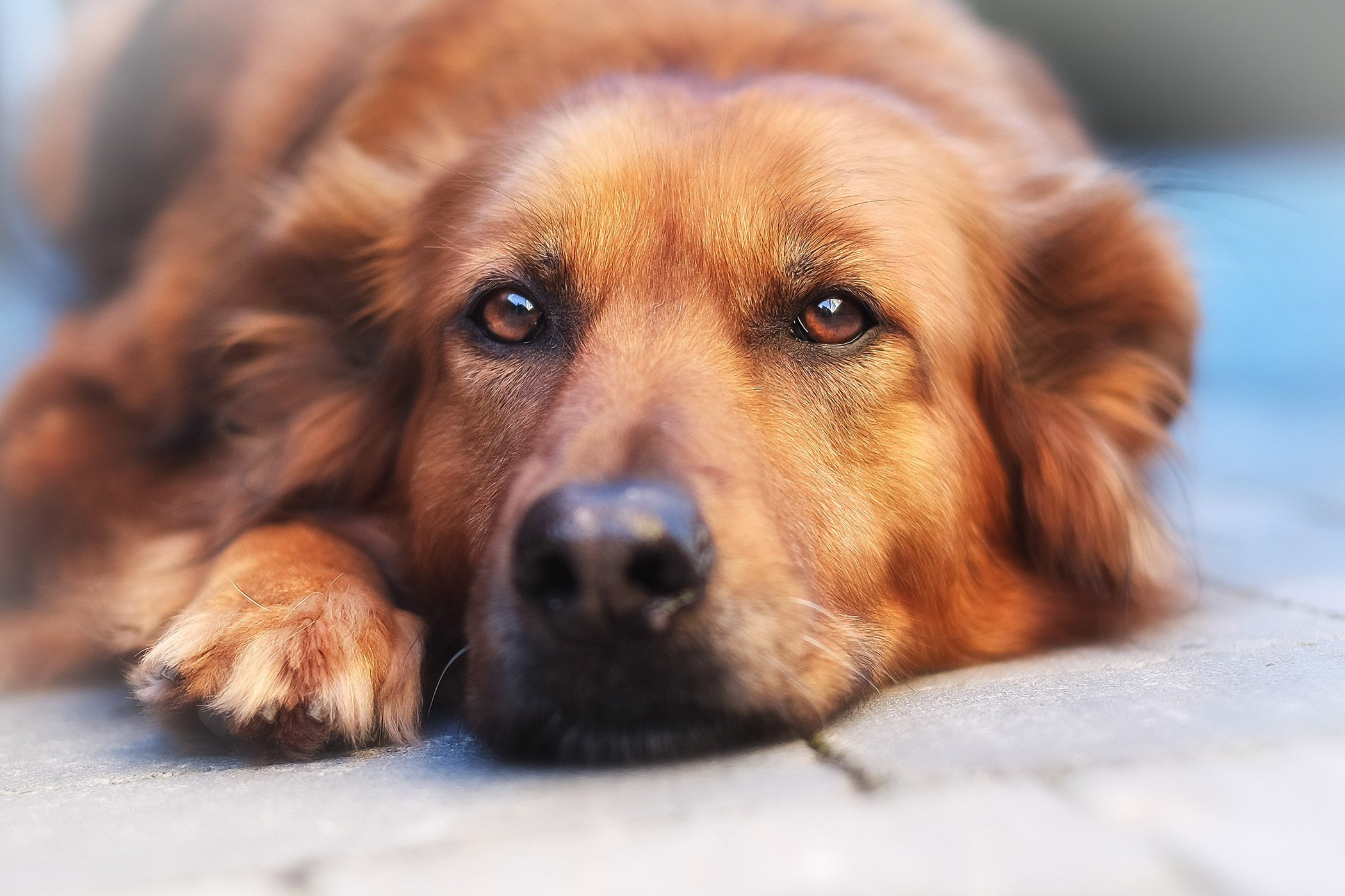 in the urine in dogs - symptoms, causes, diagnosis, treatment