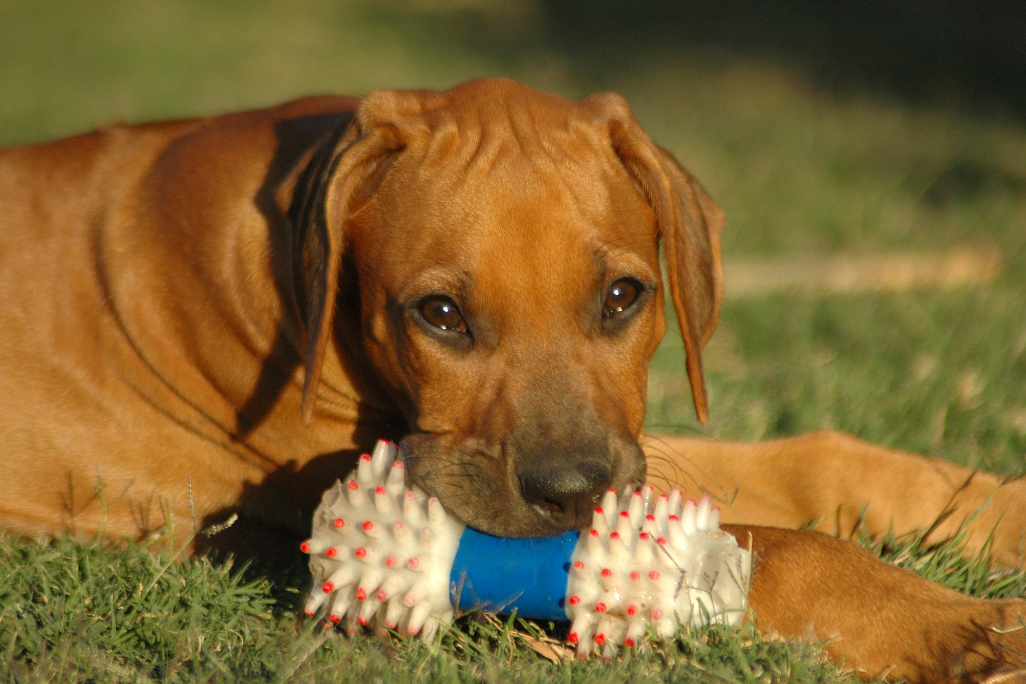 Bronchoscopy in Dogs