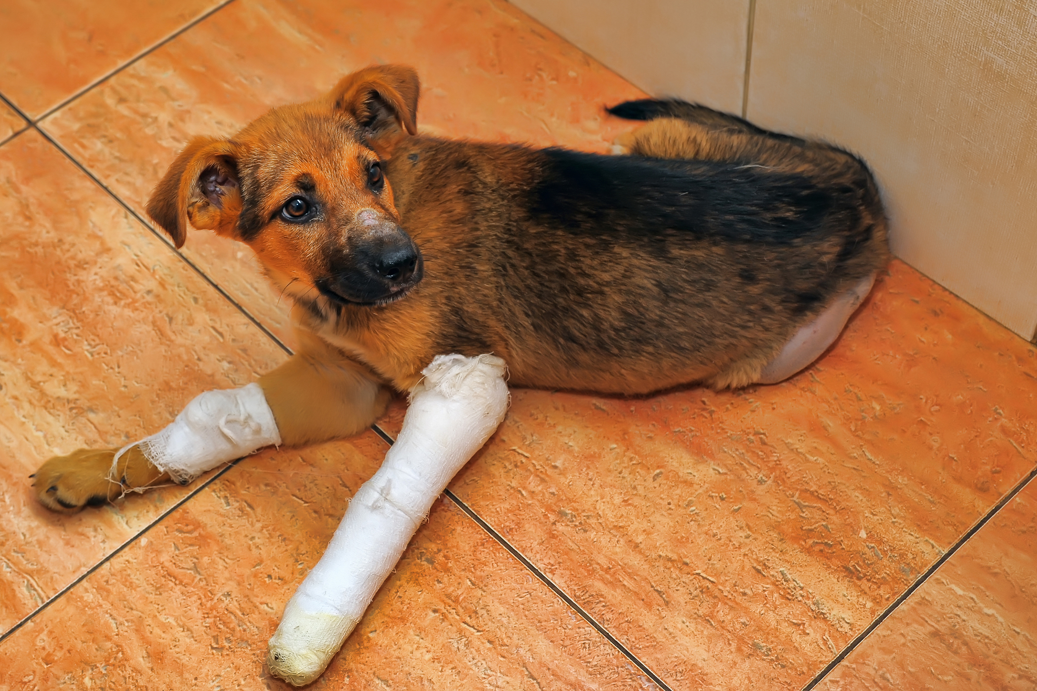 Canine Unicompartmental Elbow in Dogs