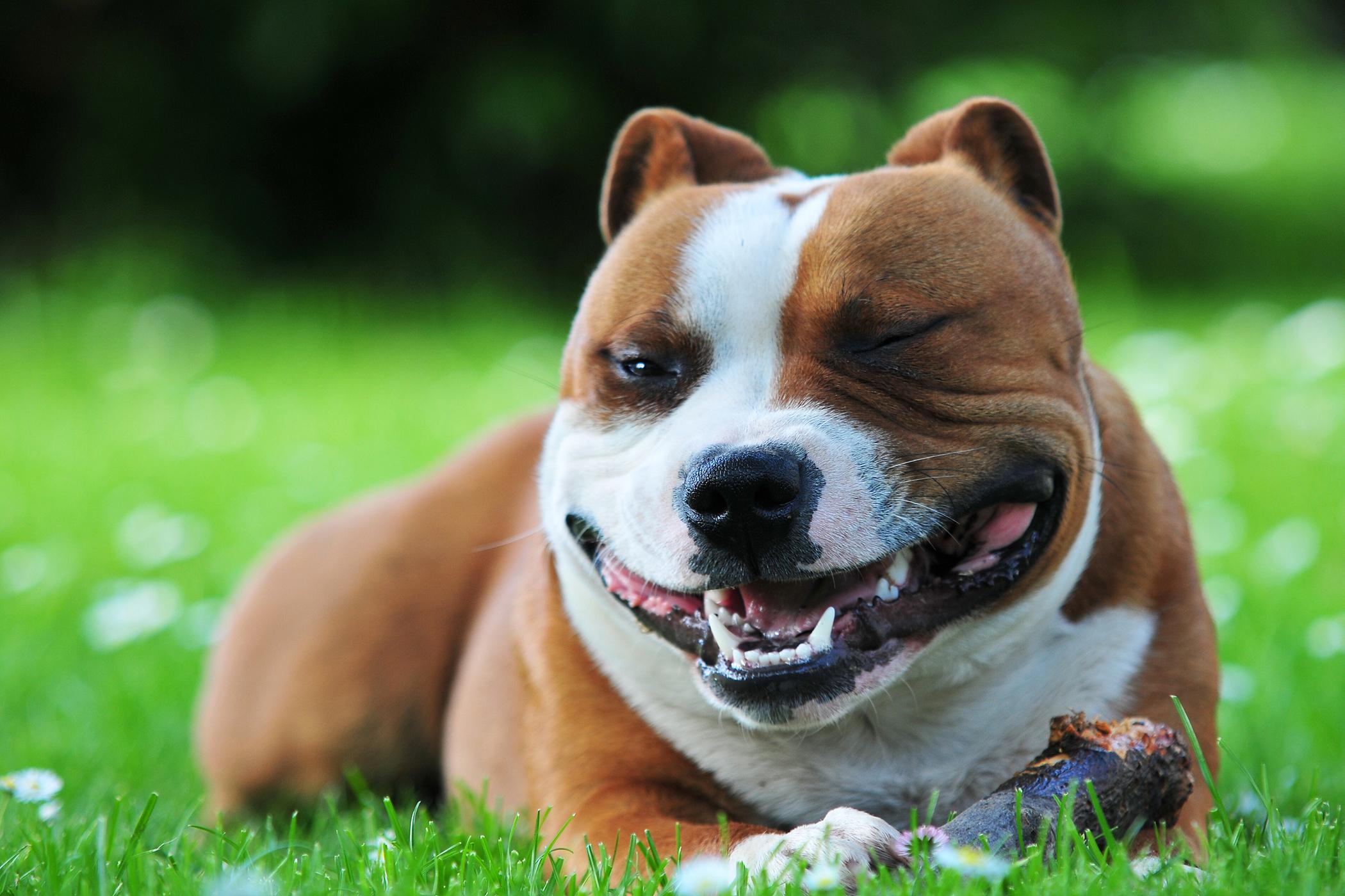 Cheiloplasty in Dogs