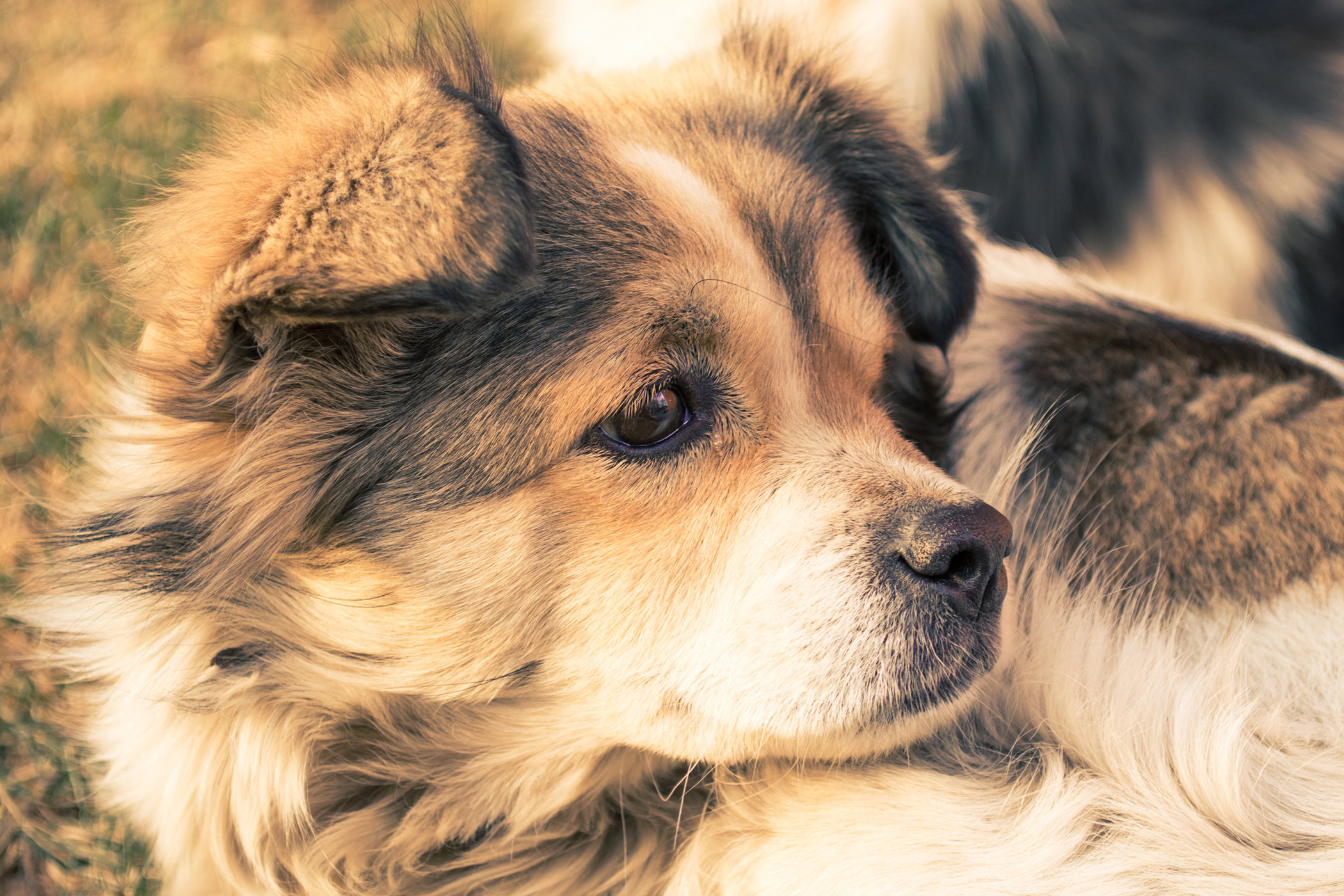 Chemical Cautery in Dogs