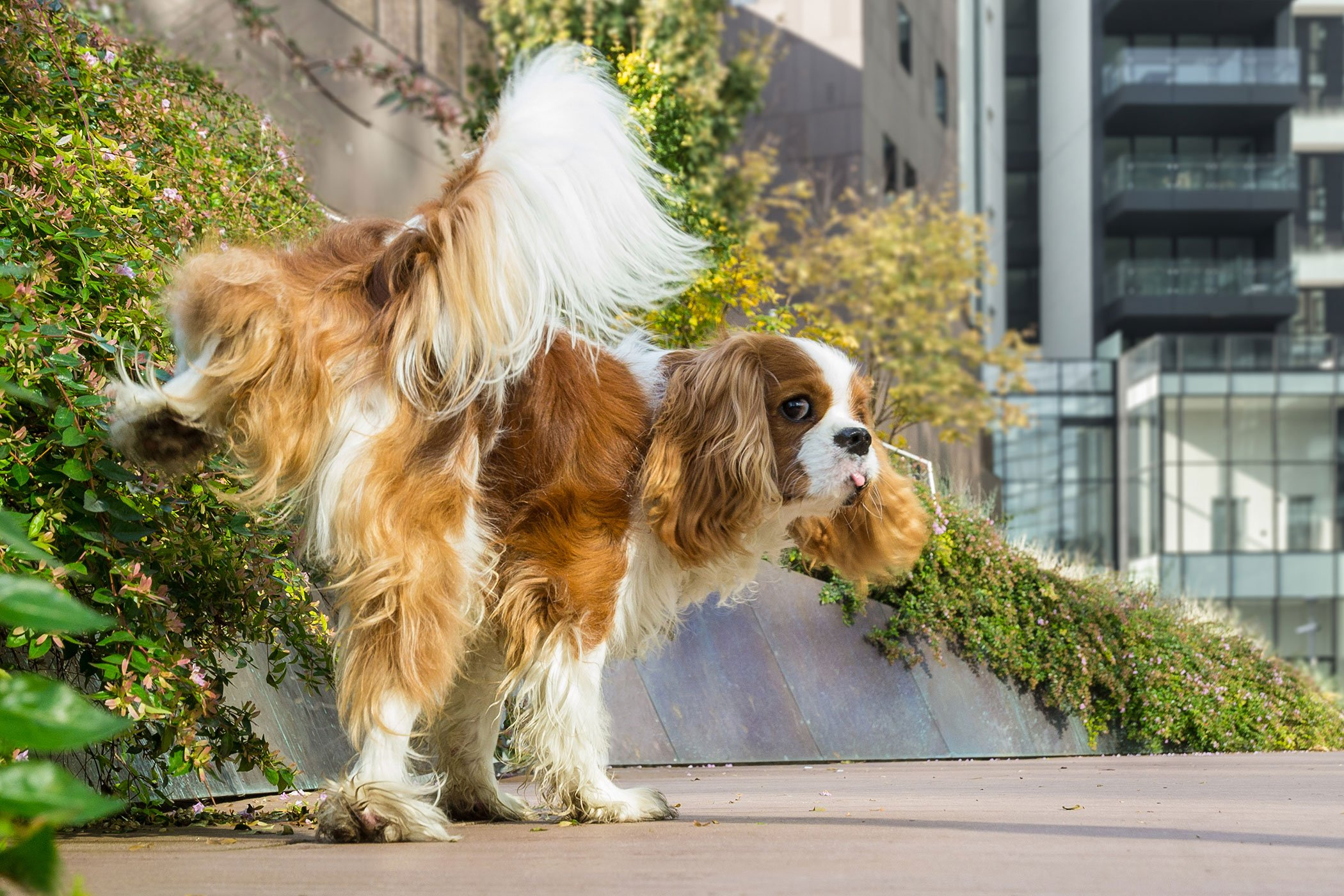 imbalance of urine in dogs - symptoms, causes, diagnosis