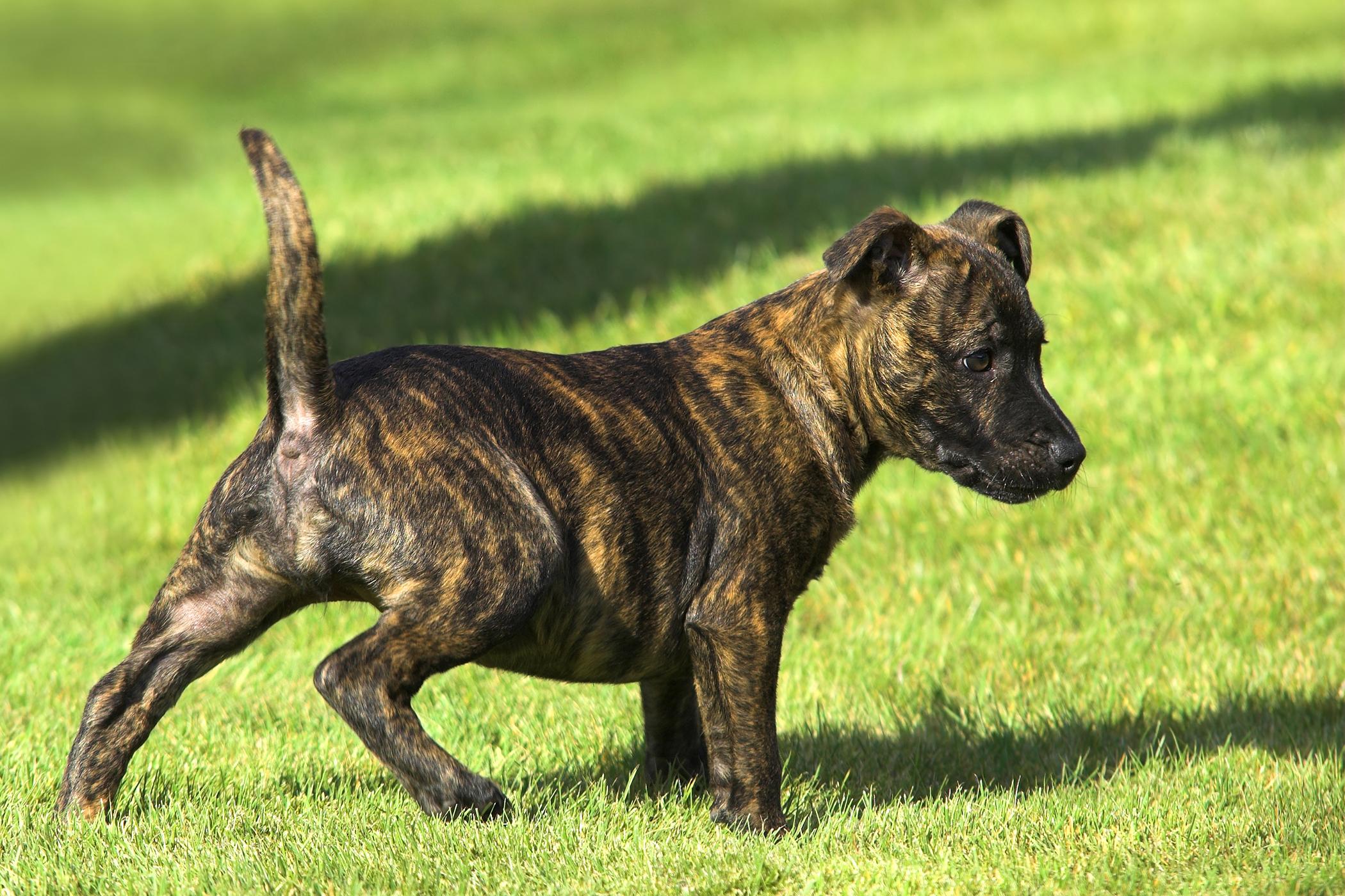 Wag Dog Walking Fort Worth