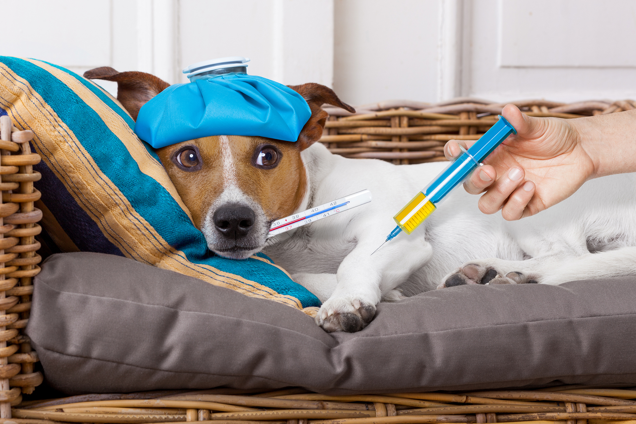 Cold Therapy in Dogs