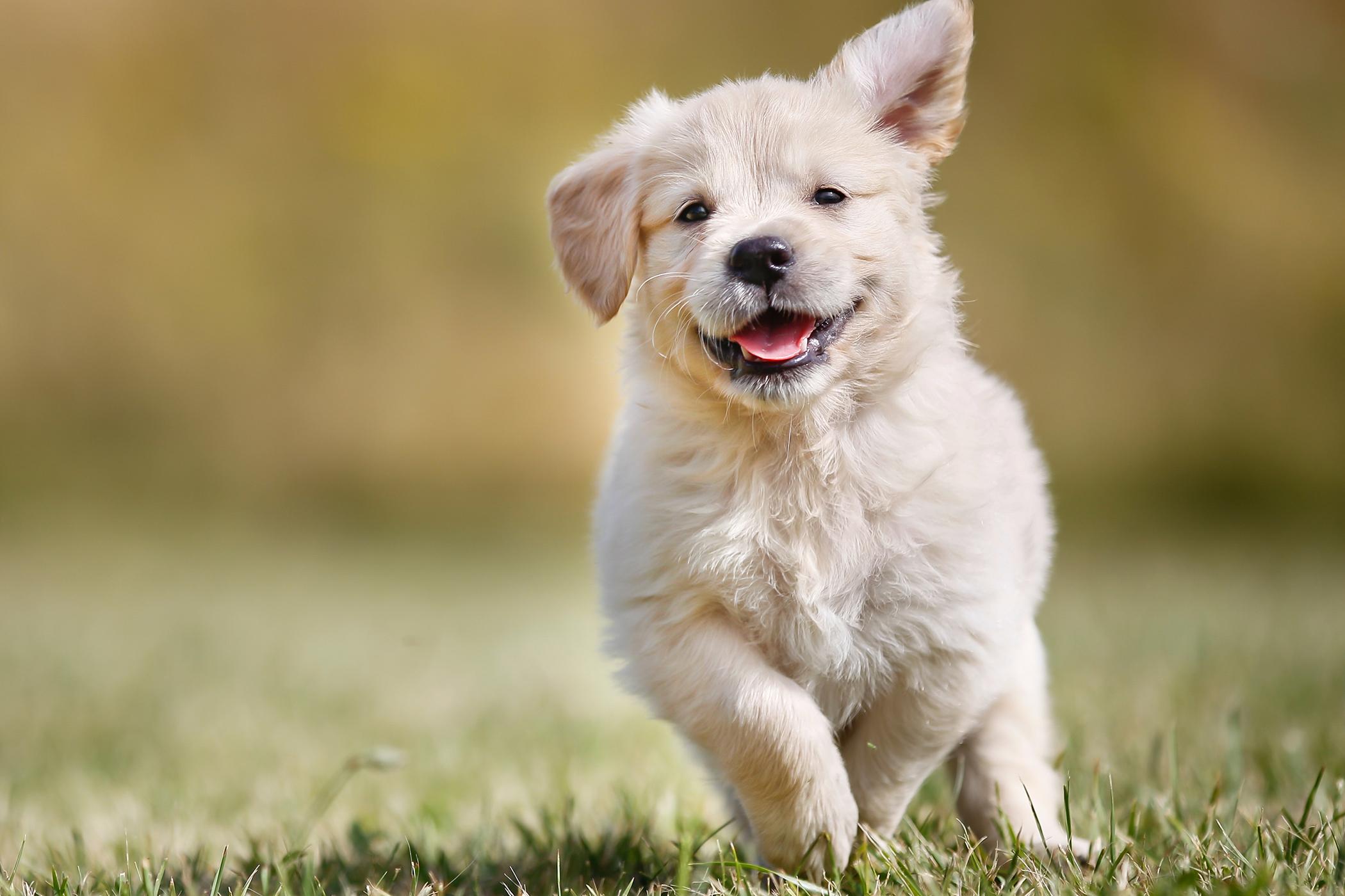 dog neutering cost on benefits