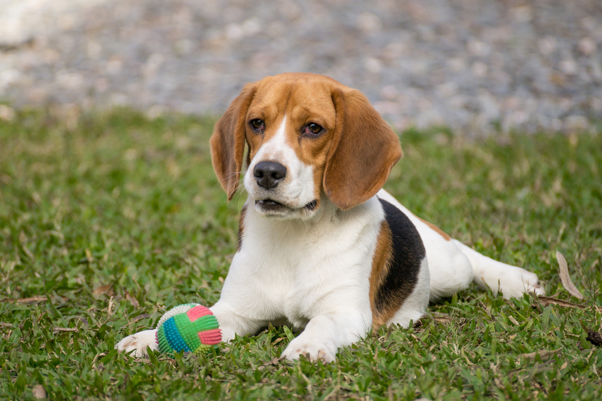 Cystic Biopsy in Dogs