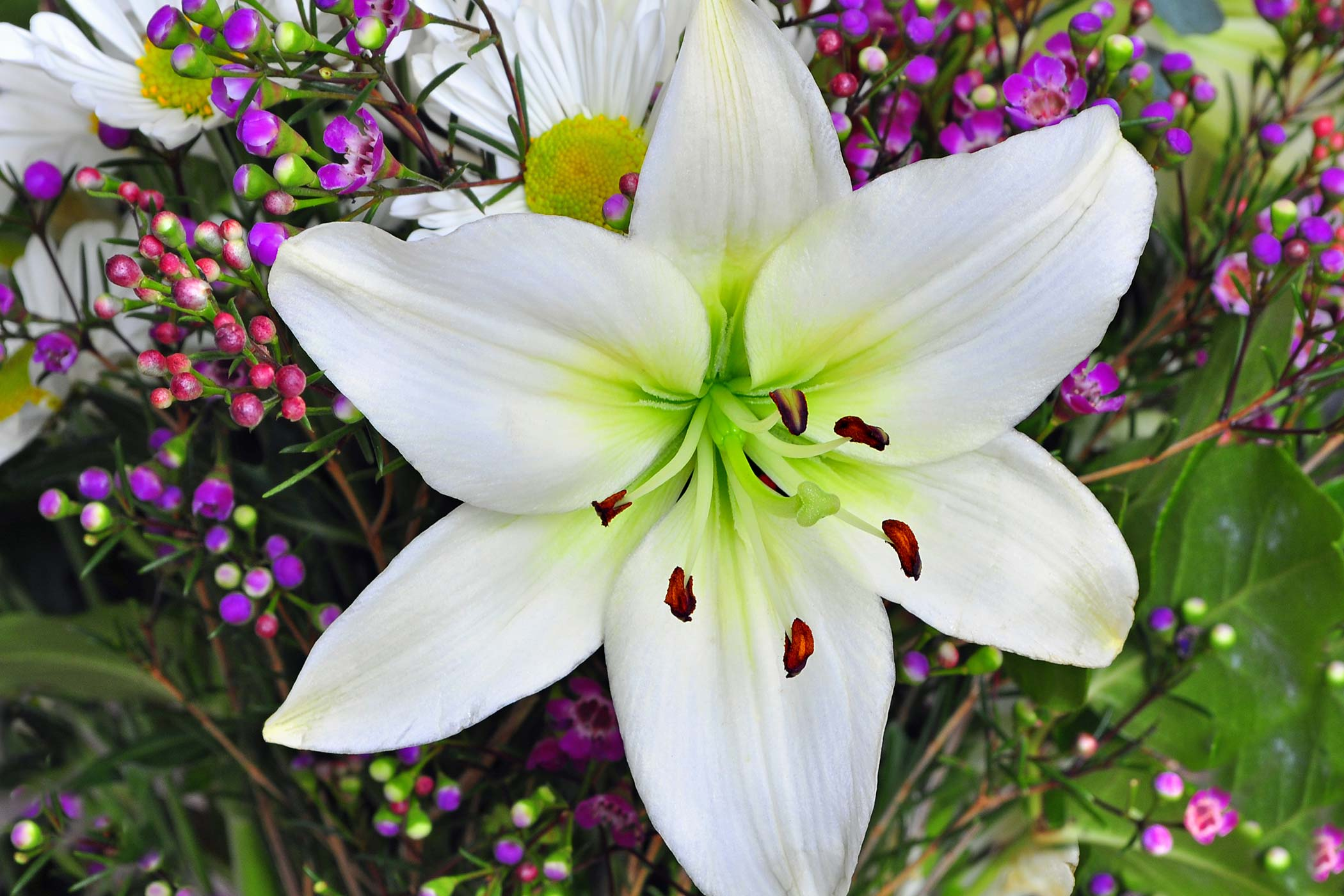 easter lily poisoning in dogs   symptoms causes