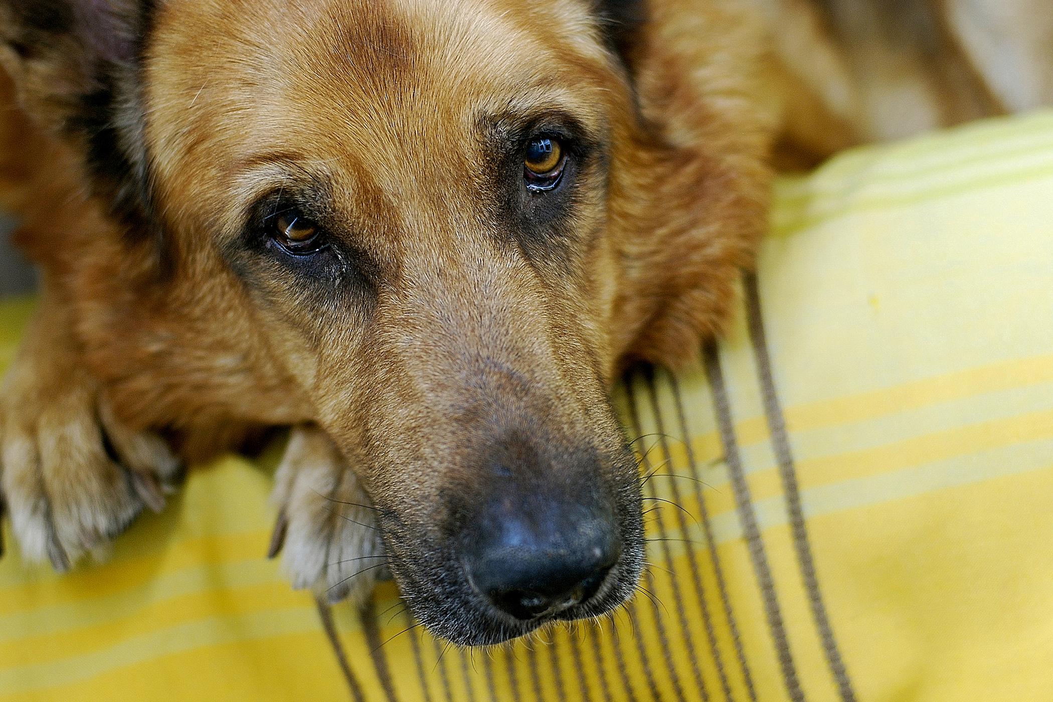 Ectopic Ureter Repair in Dogs