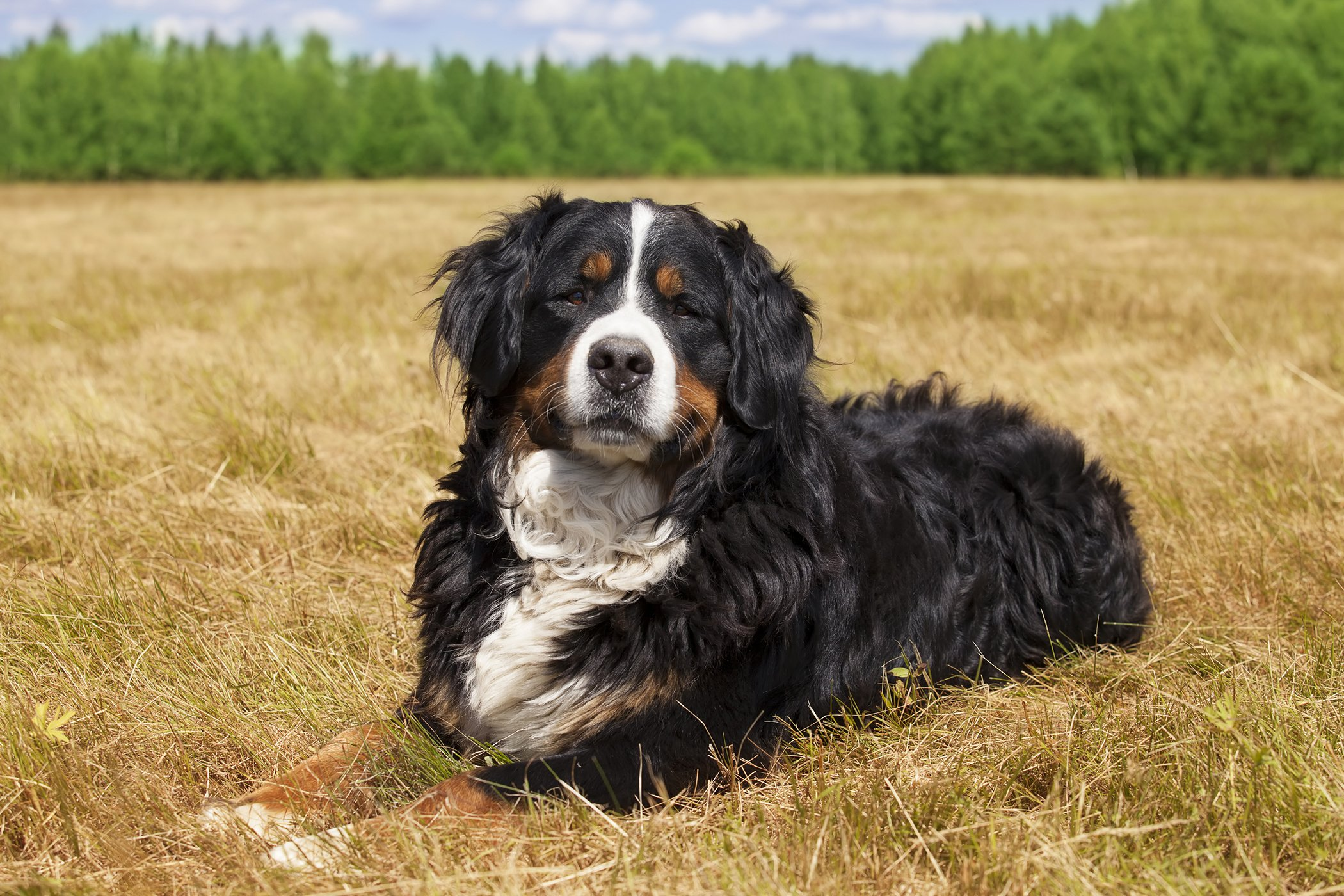 Epineural Neurorrhaphy in Dogs