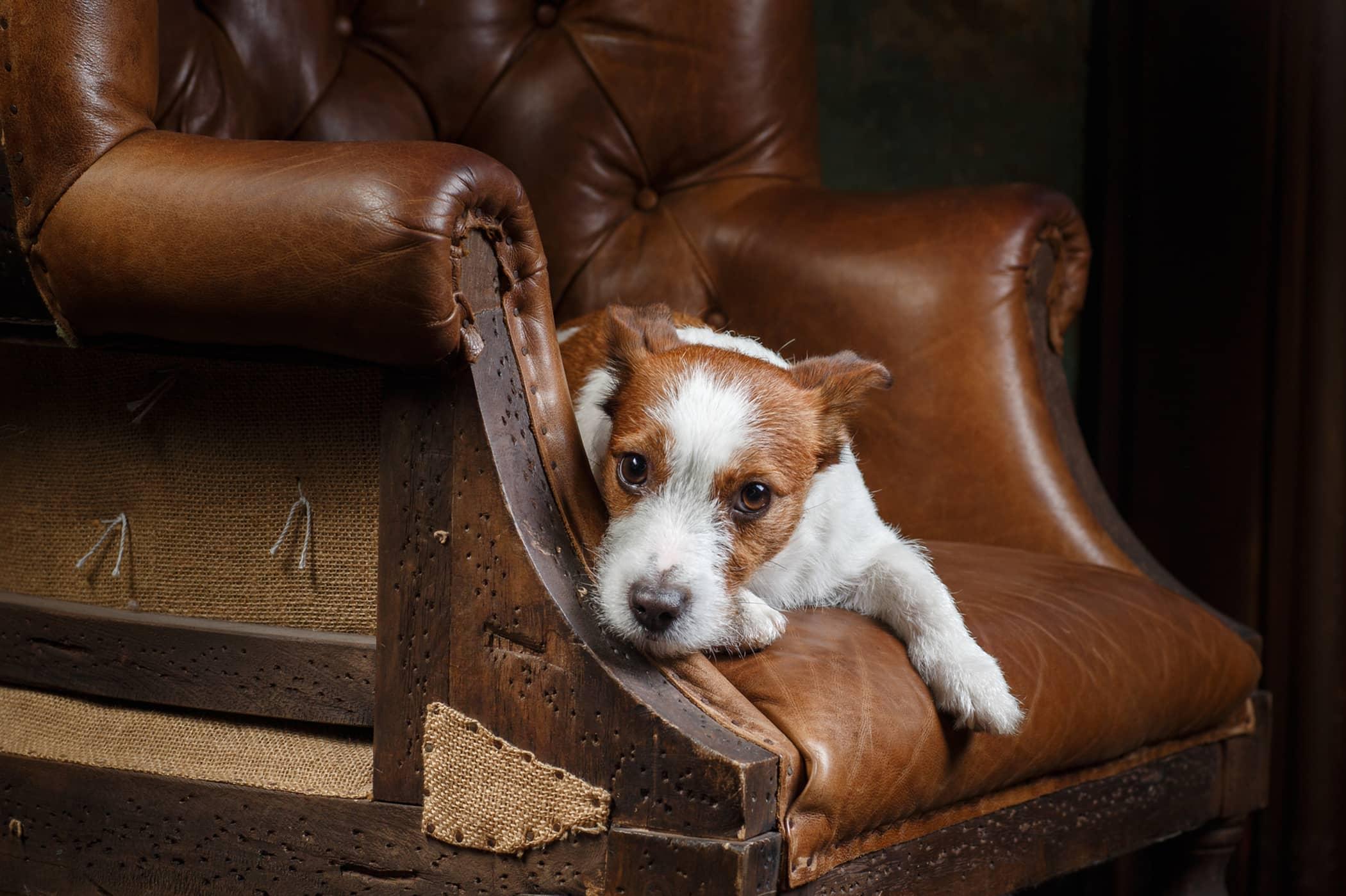 Esophageal Balloon Dilation in Dogs