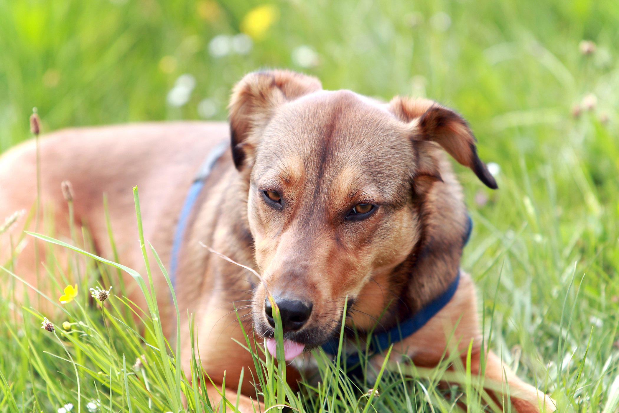Foraminotomy in Dogs
