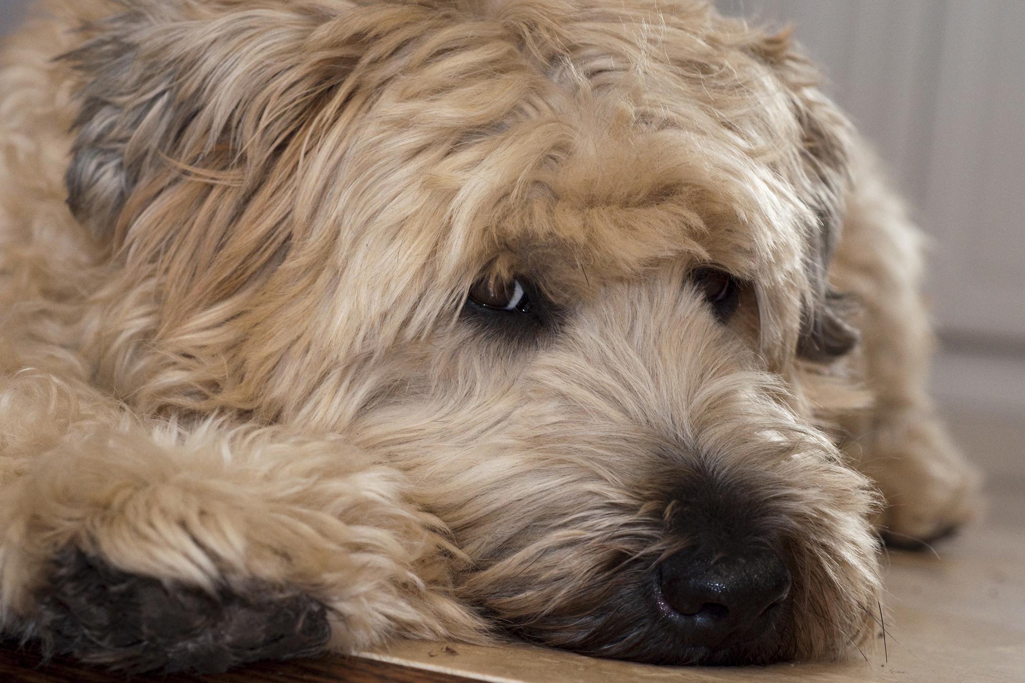 Gastrointestinal Biopsy in Dogs