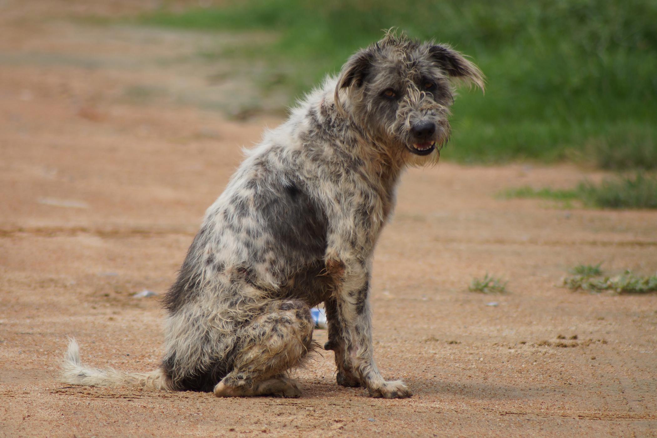 Gastrojejunostomy in Dogs