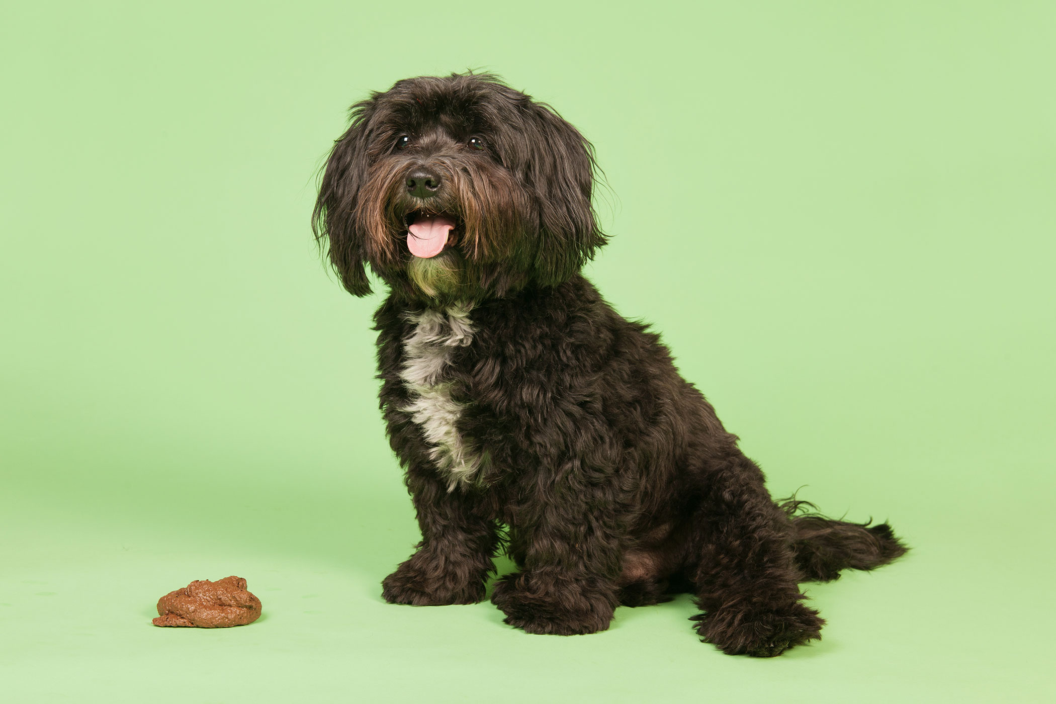 Giardia In Dogs Symptoms Causes Diagnosis Treatment