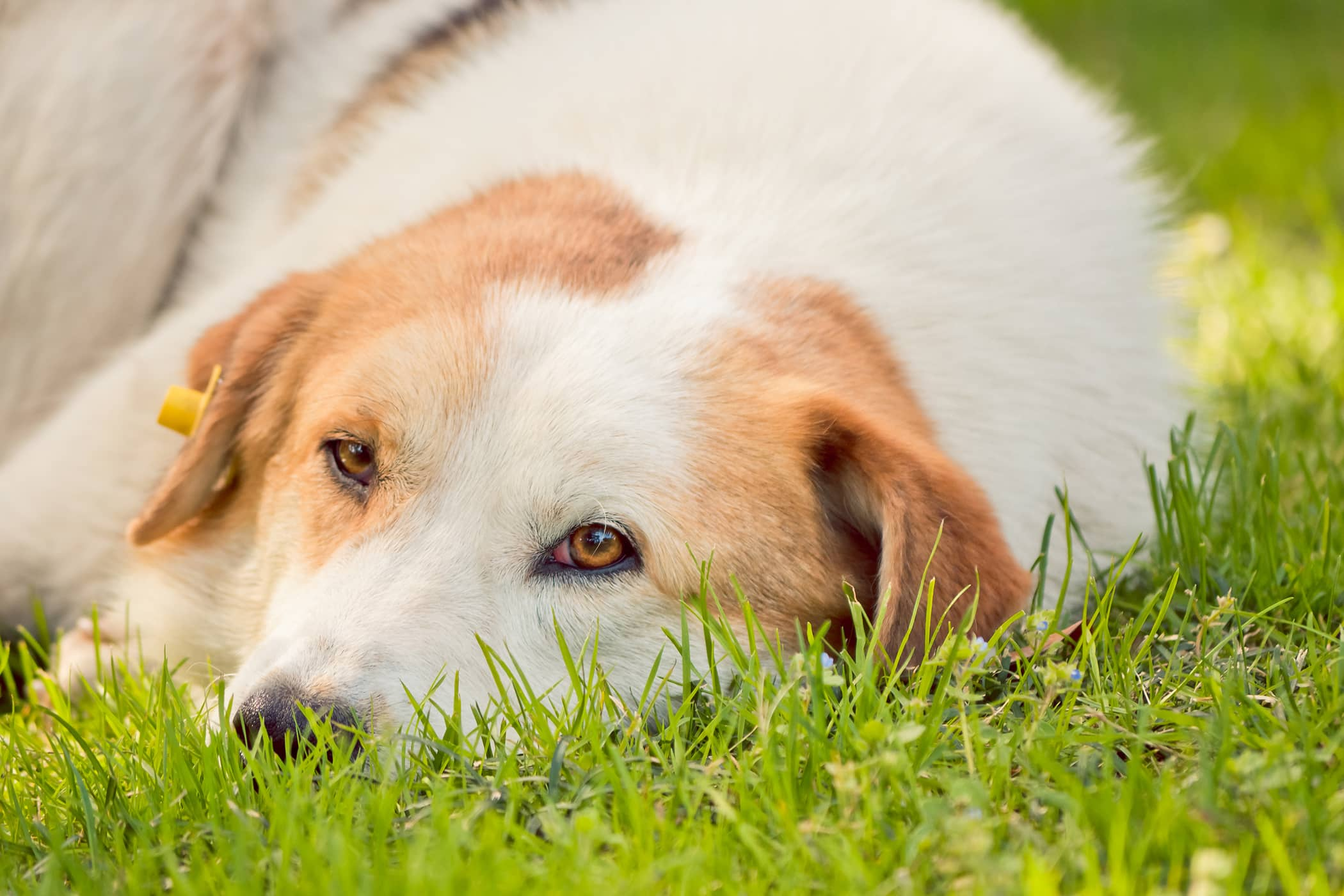 Herbal Cancer Support in Dogs