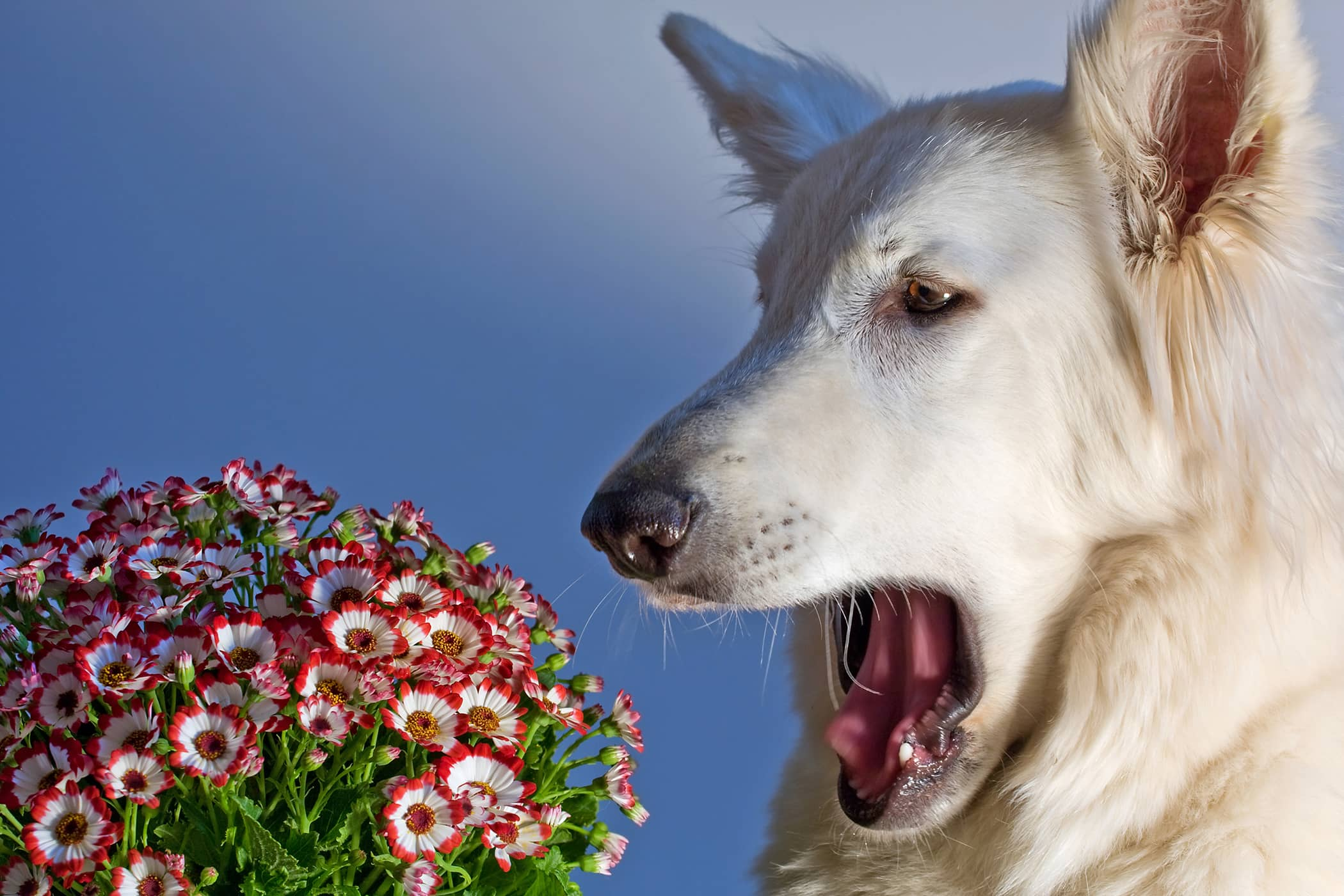 Holistic Allergy Treatment in Dogs