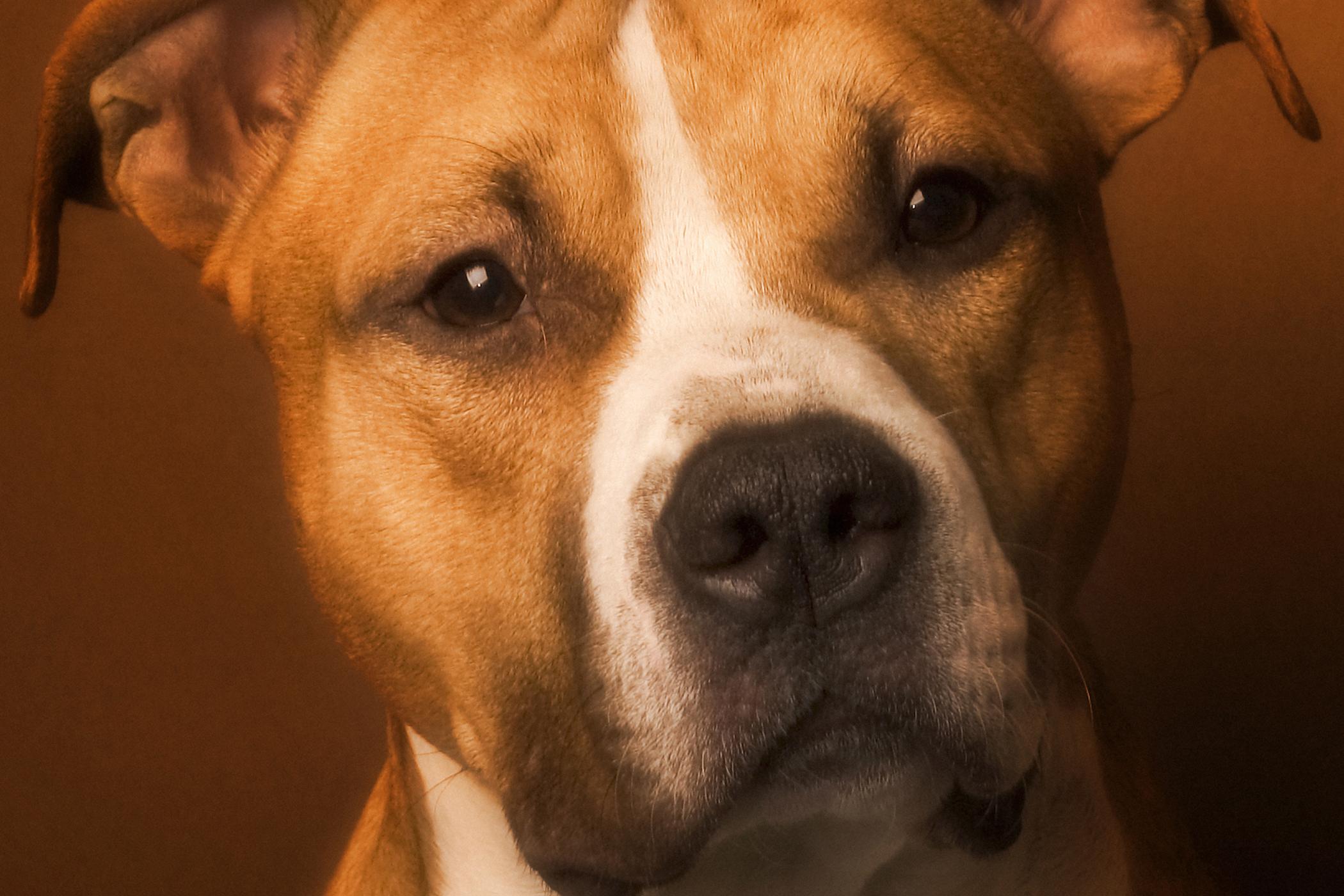 Hydrocephalus in Dogs