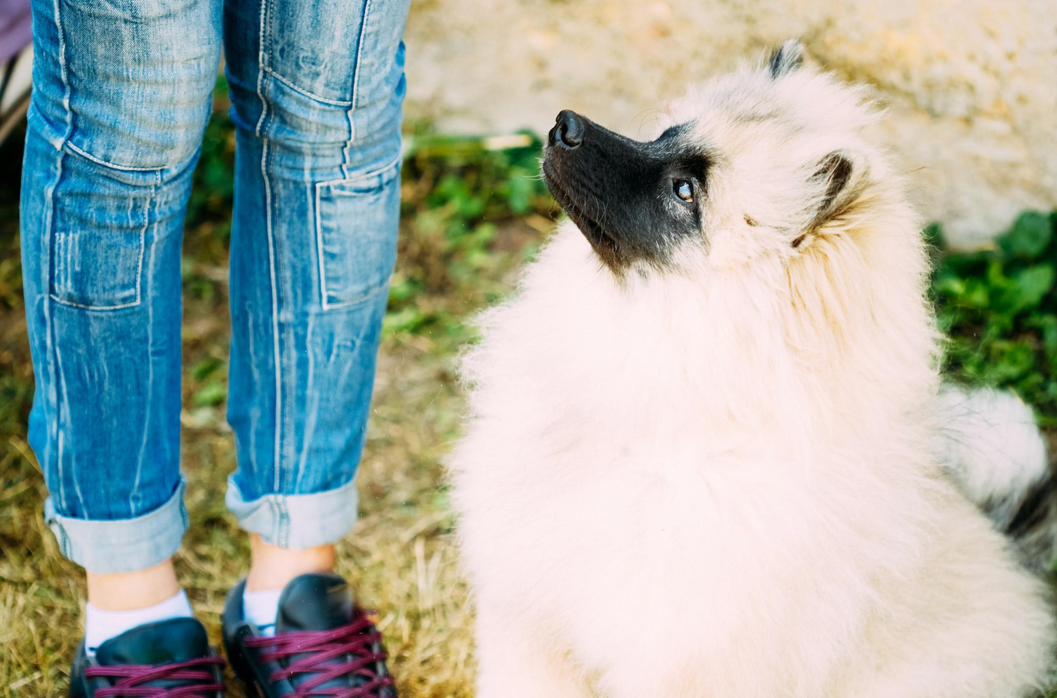 Hyperparathyroidism in Dogs