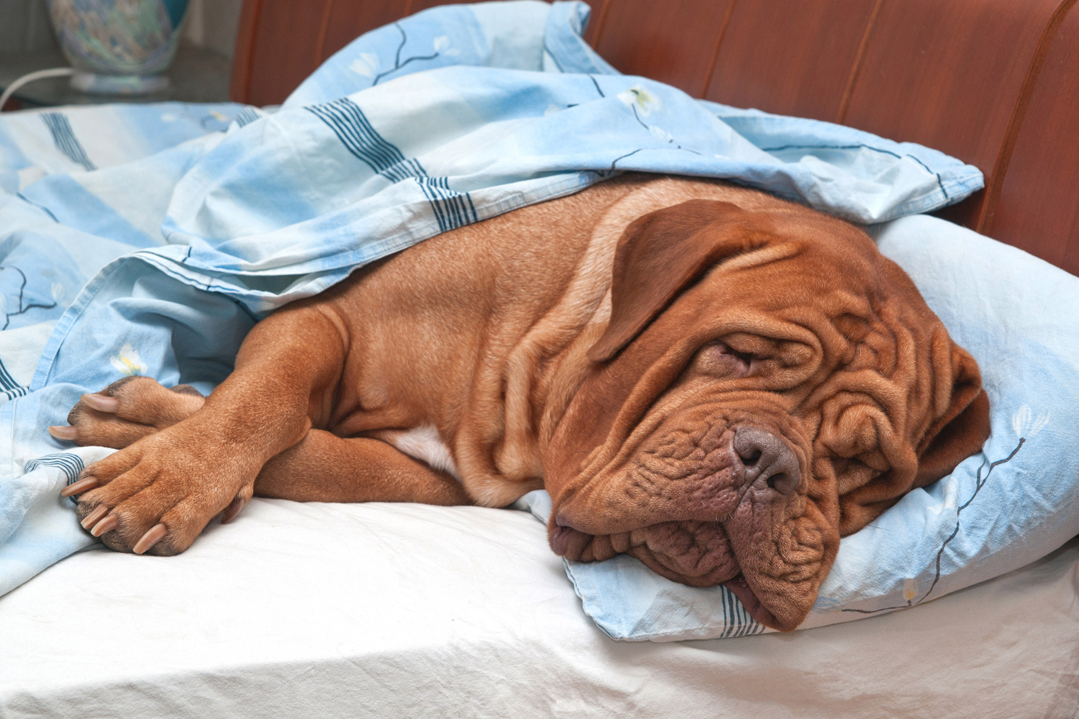 Cancer In The Small Intestine In Dogs