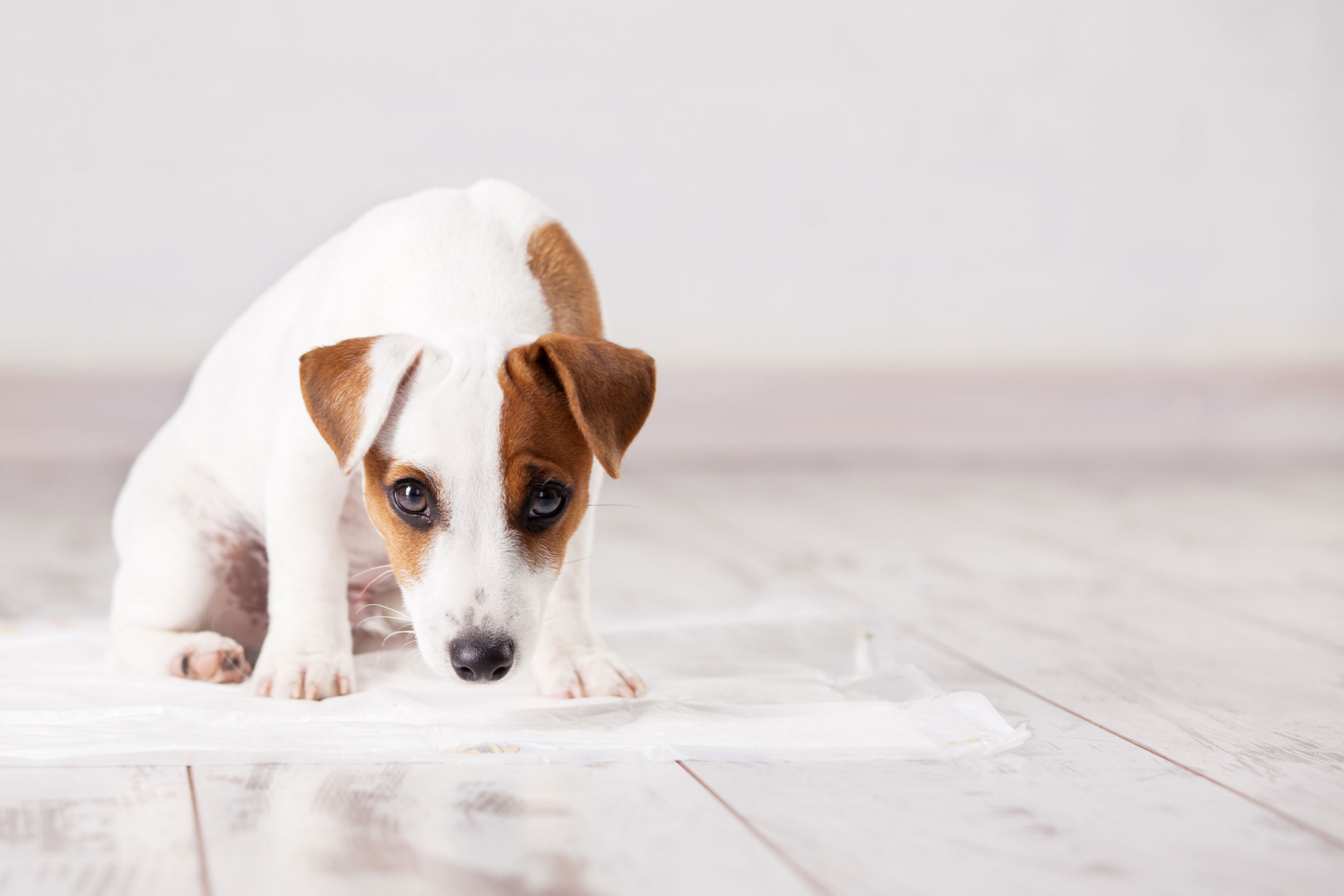 Lack of Bladder Control in Dogs