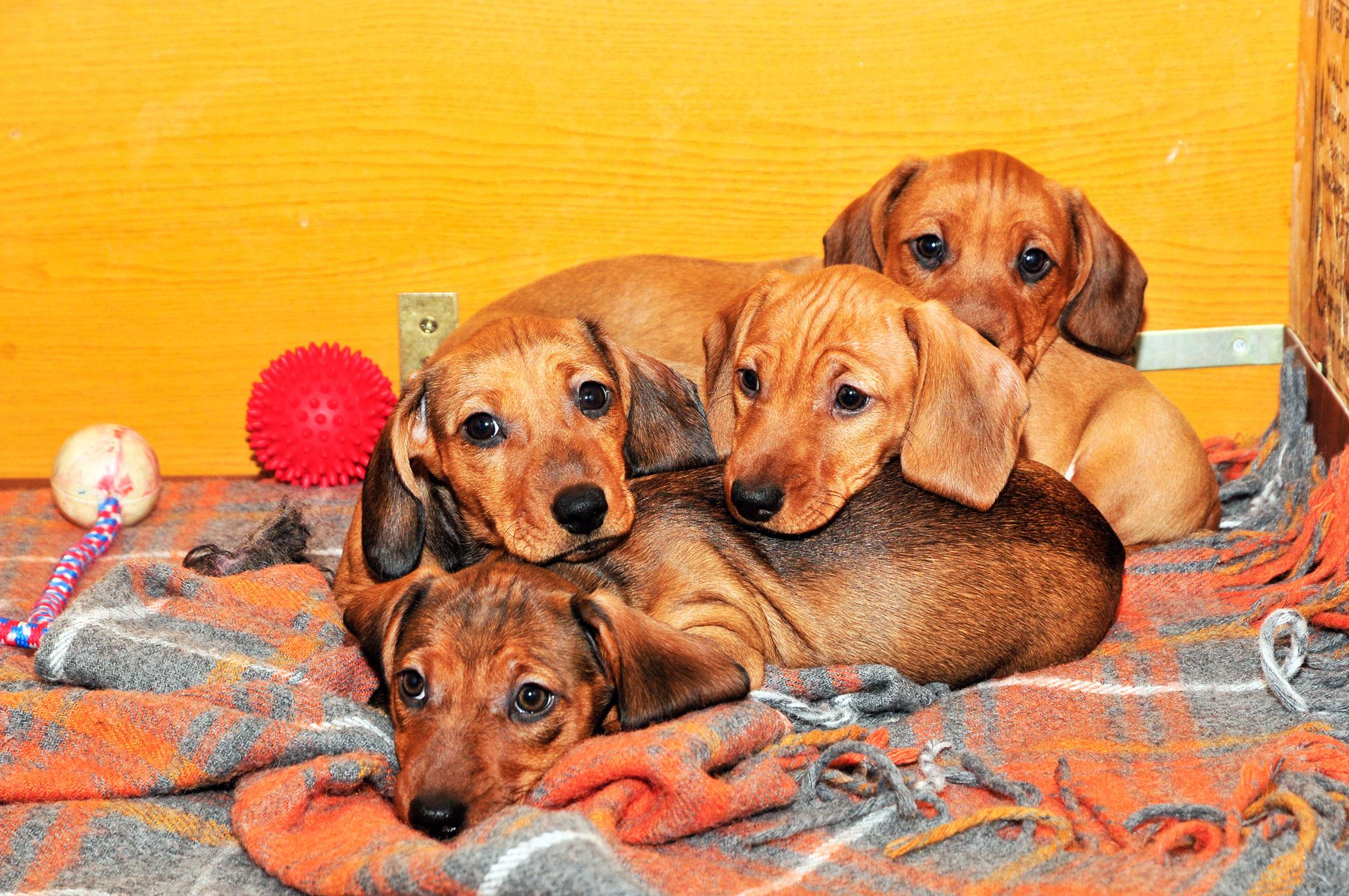 Maternal Behavior Problems in Dogs