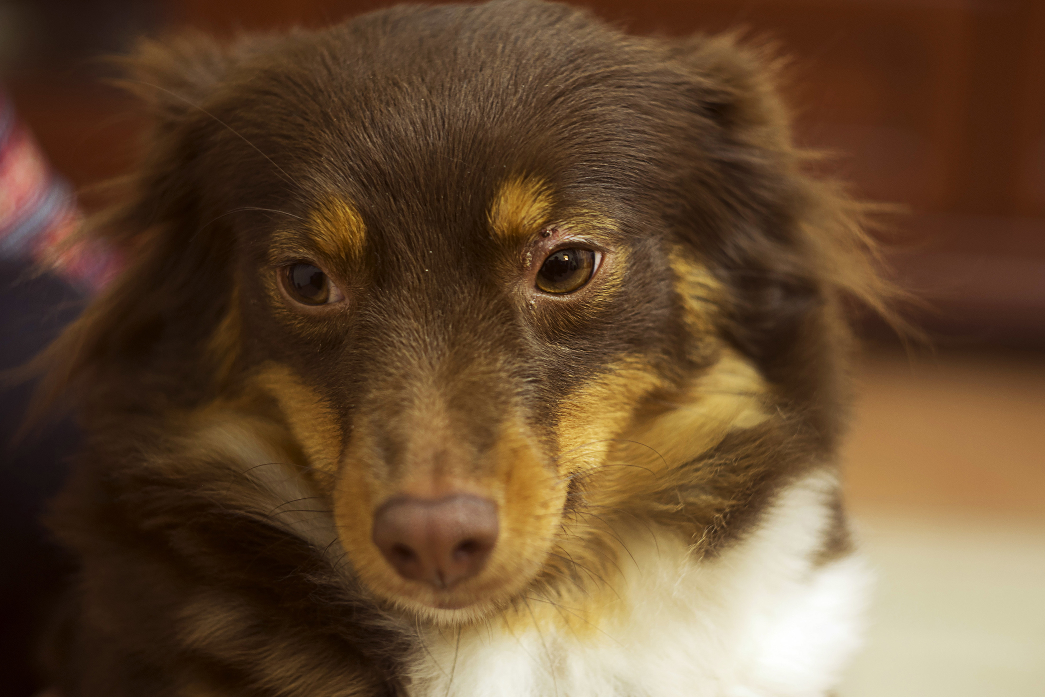 Mediastinal/Pleural Biopsy in Dogs