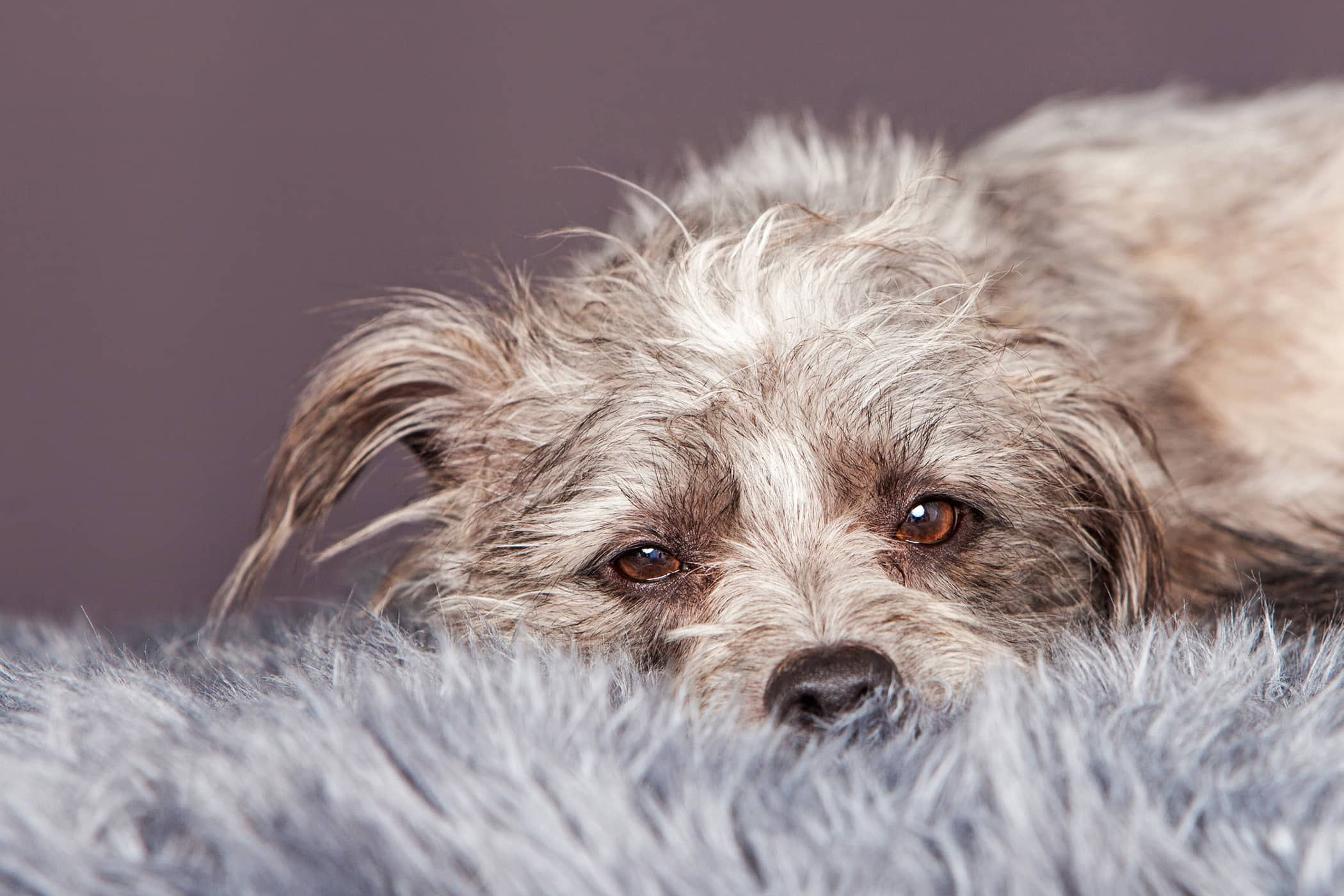Natural Cough Remedies in Dogs