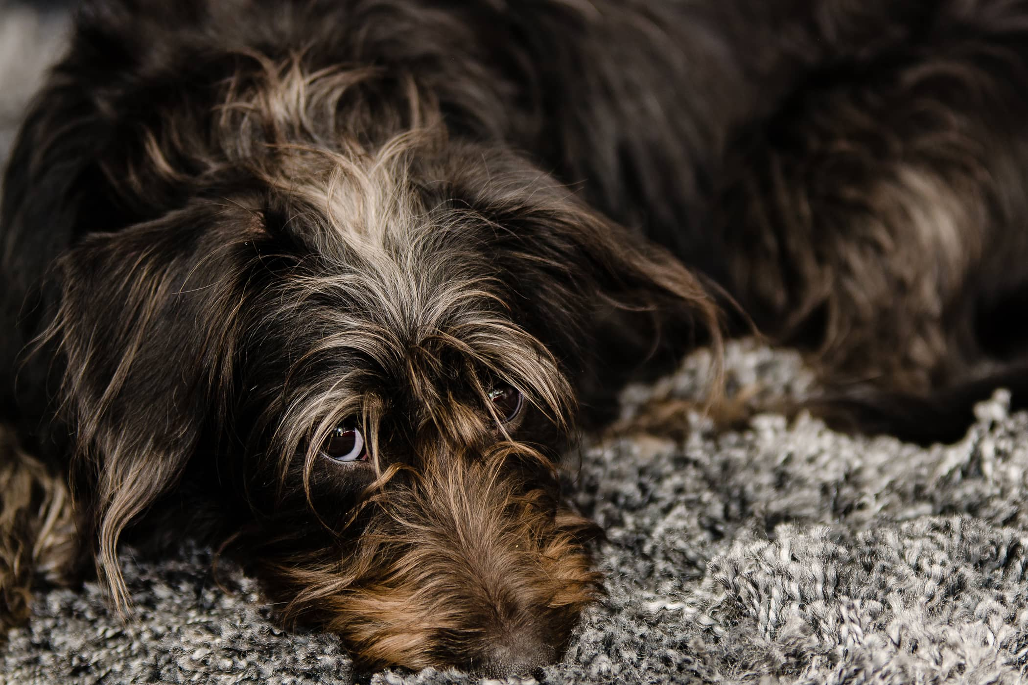 Natural Diarrhea Remedies in Dogs