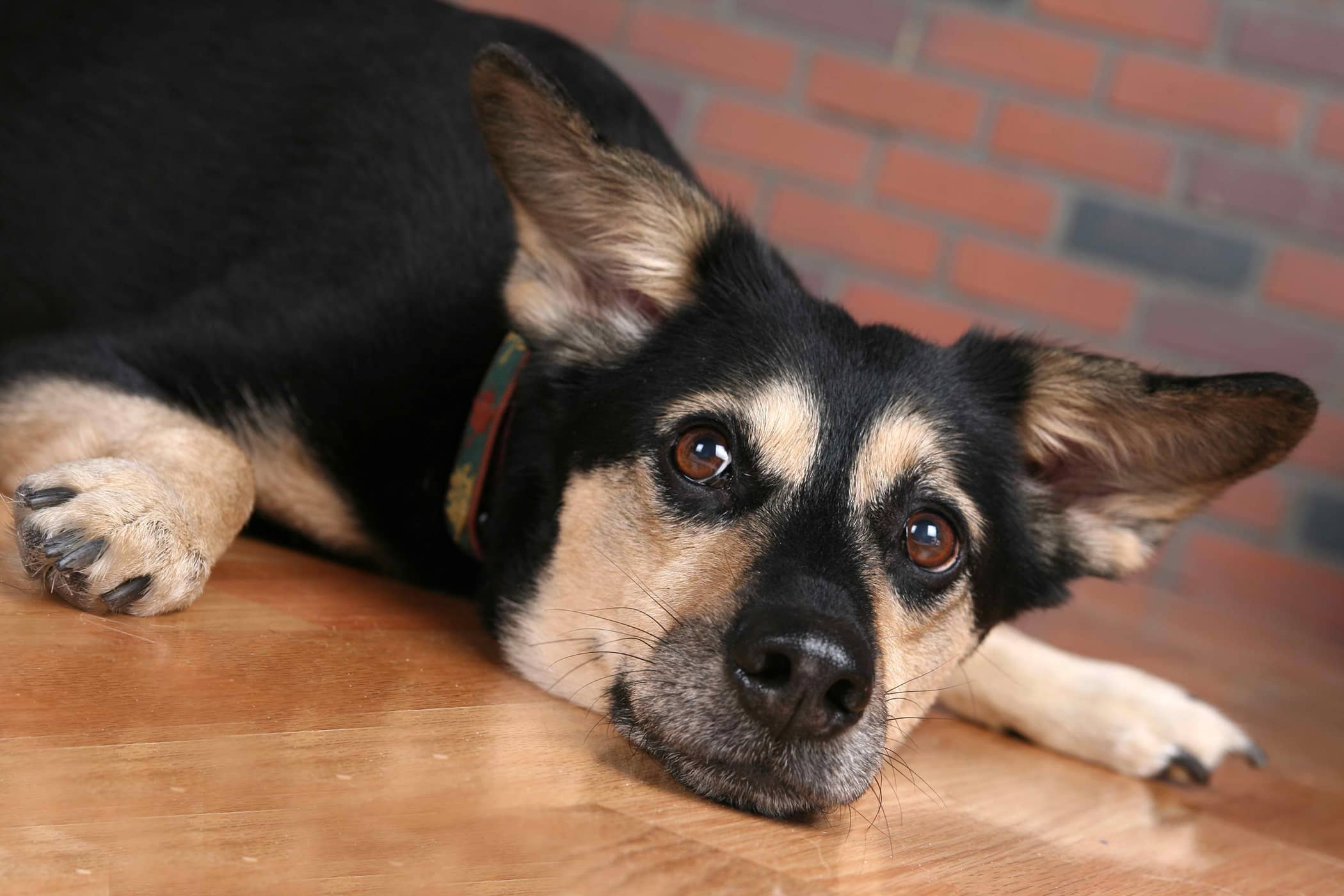 Nephrotomy in Dogs