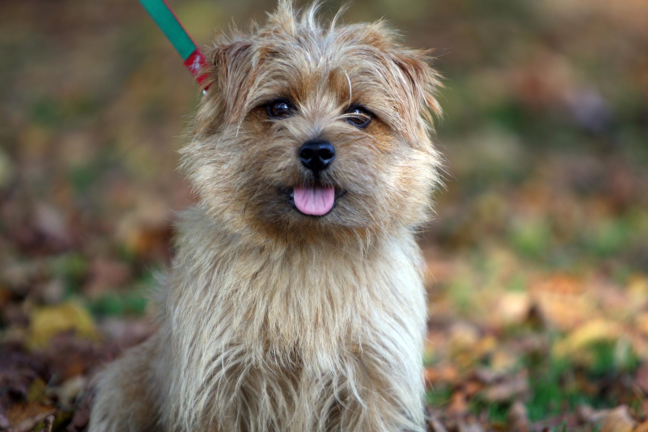 Omentalization in Dogs