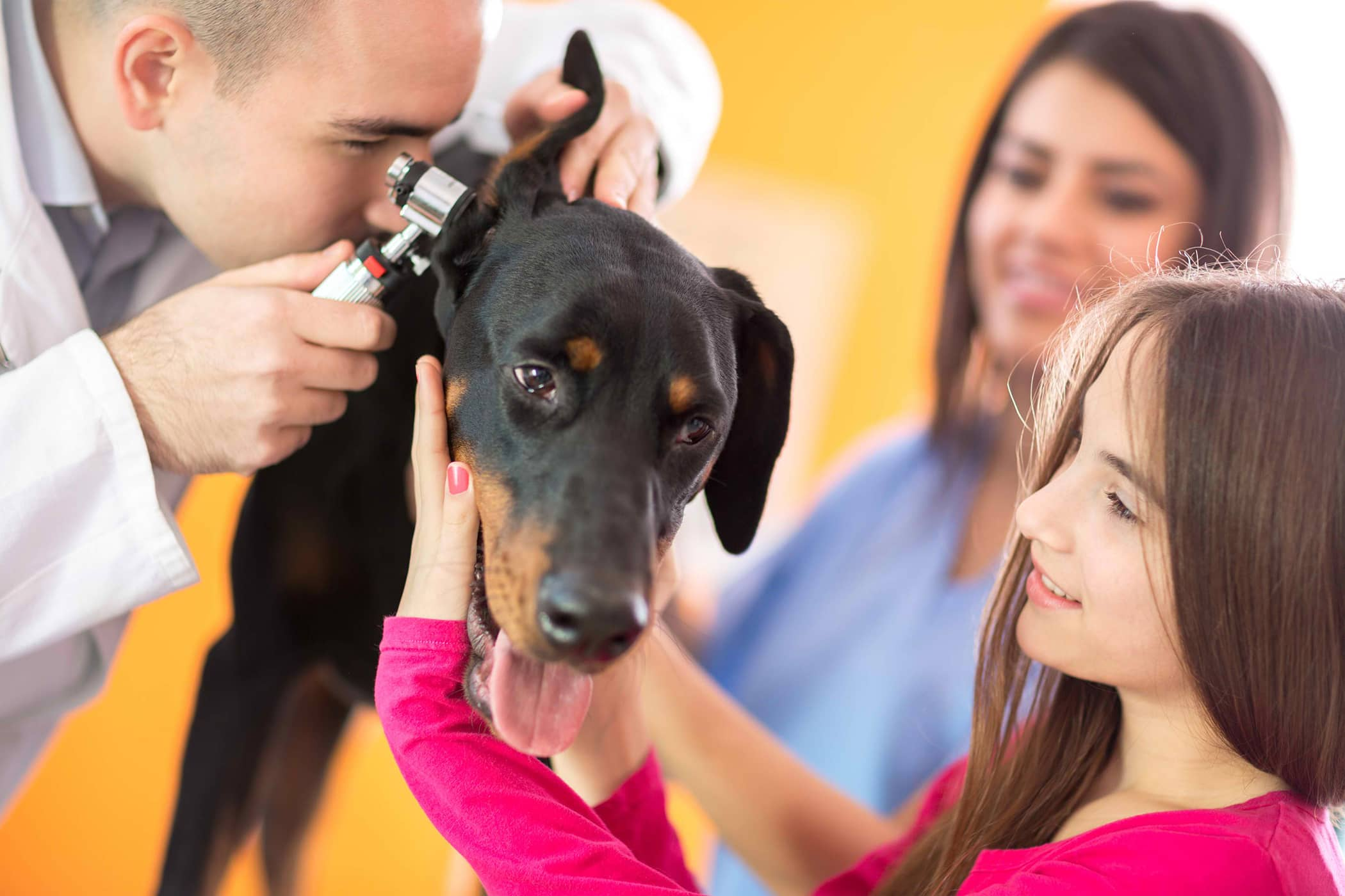 Otoscopy in Dogs