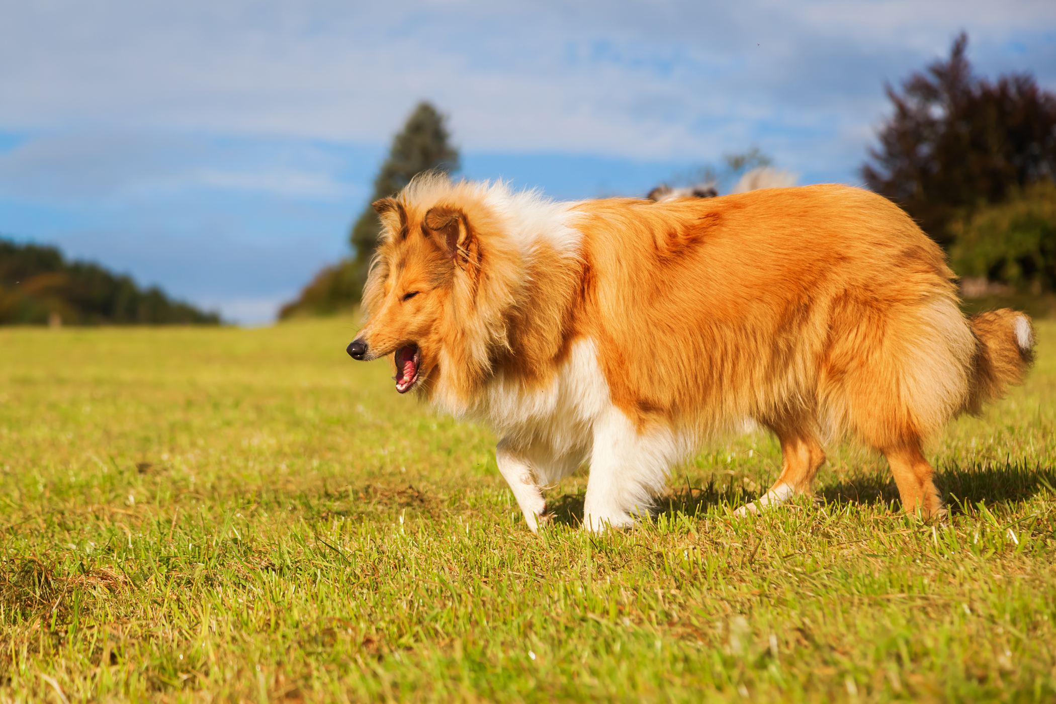 PDA Ligation in Dogs