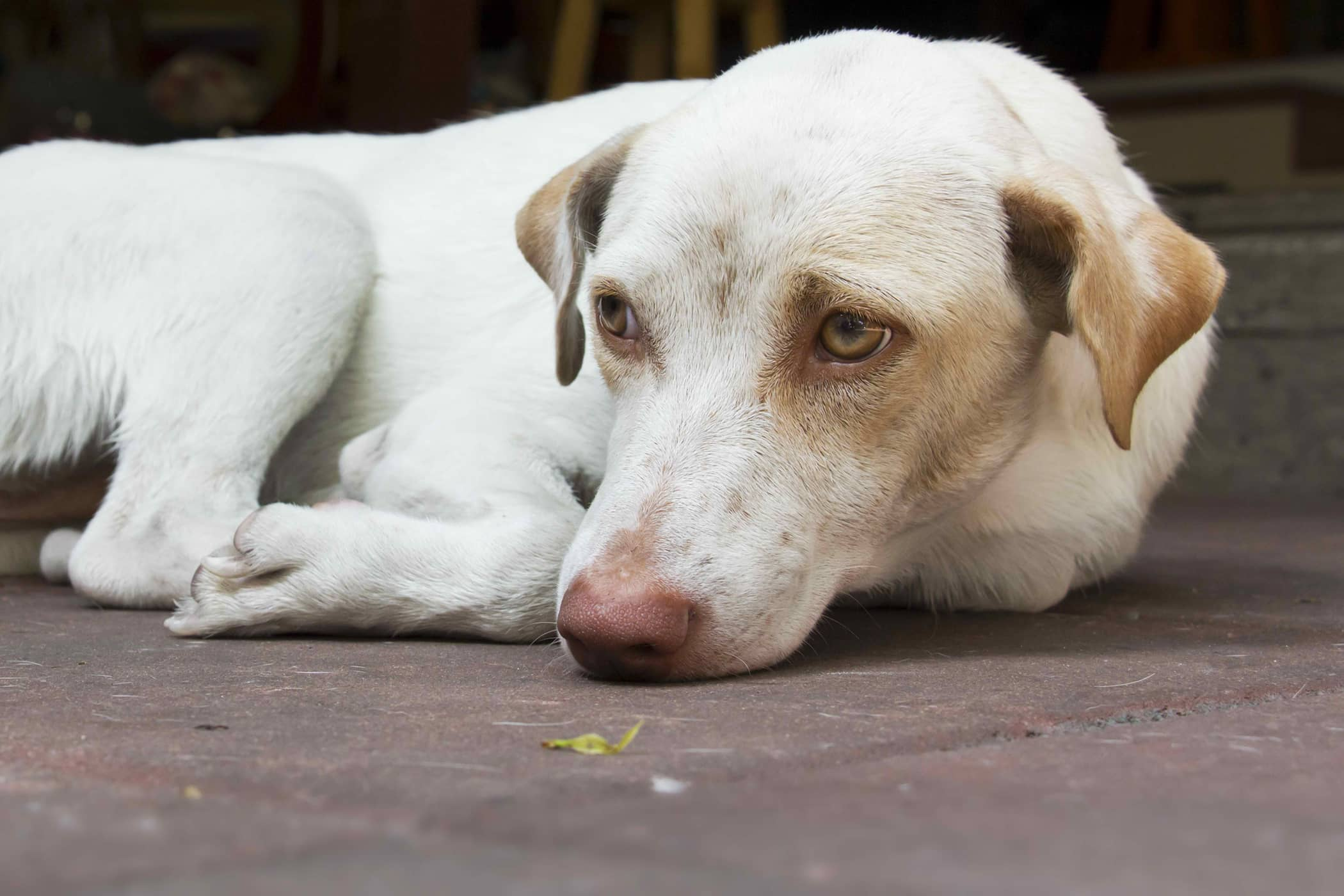 Probiotic Supplements in Dogs