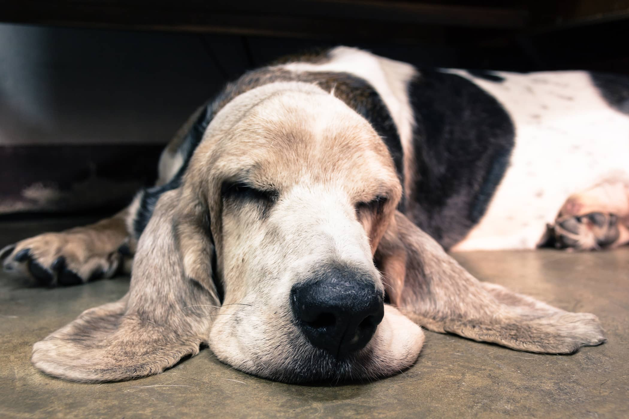 Retained Placenta Removal in Dogs