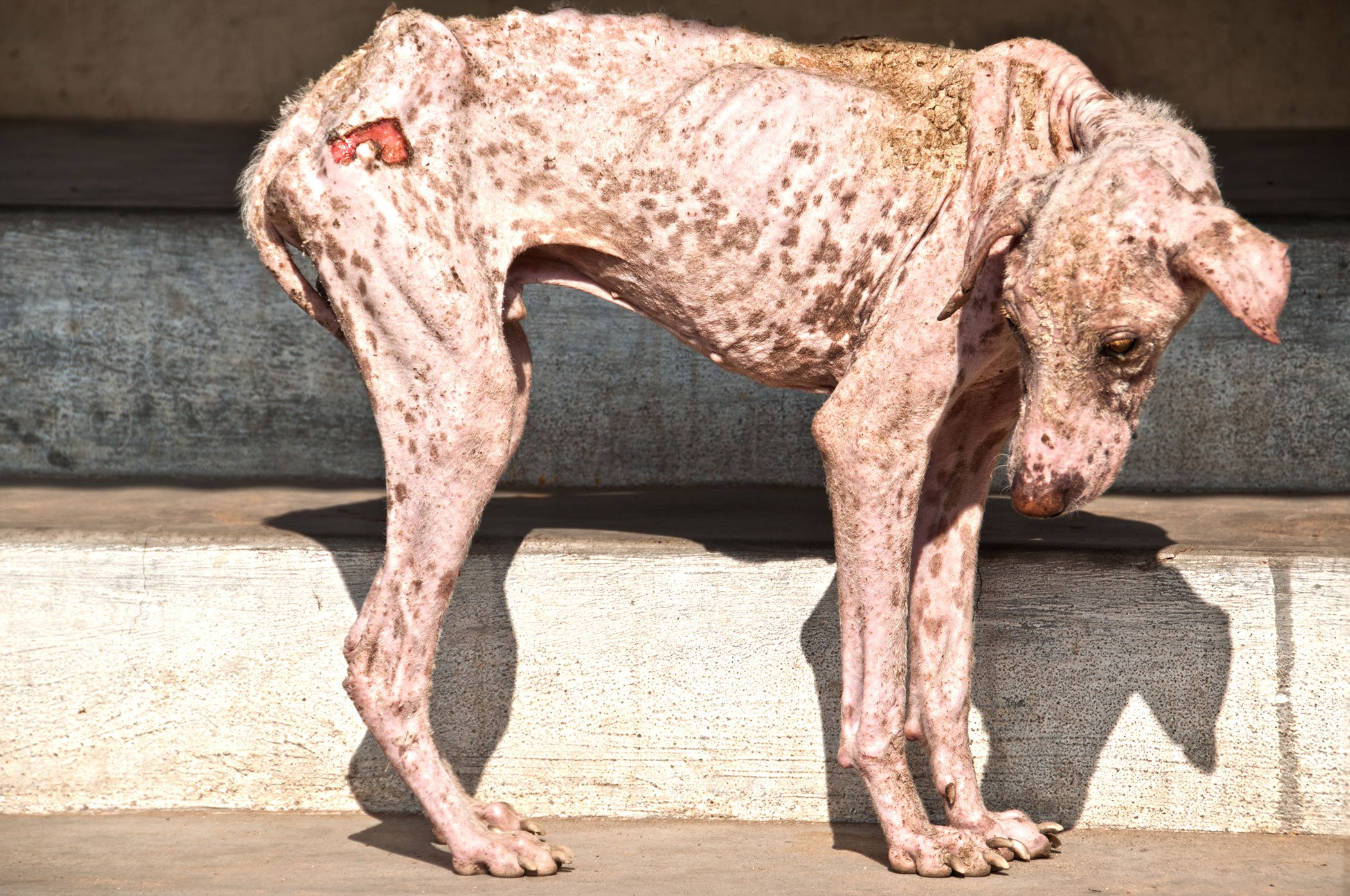 How Can You Treat Mange On A Dog