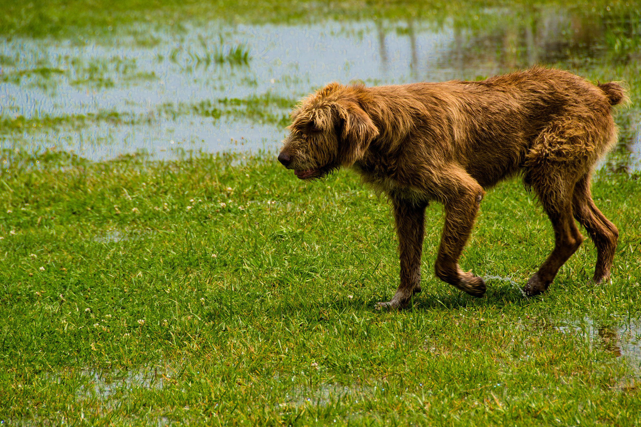 bite in dogs symptoms causes diagnosis treatment recovery