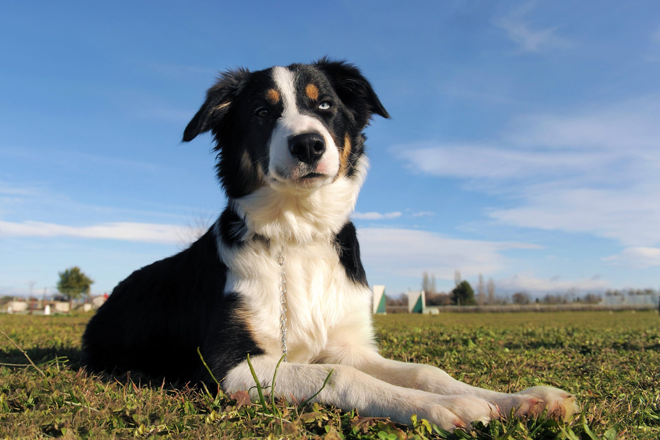 Thoracoscopy in Dogs